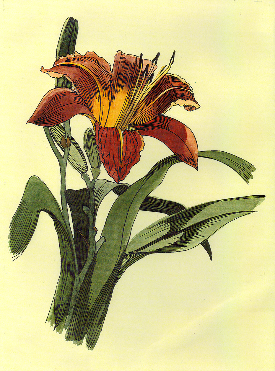 Patti King Slavtcheff_Floral_Tiger Lily