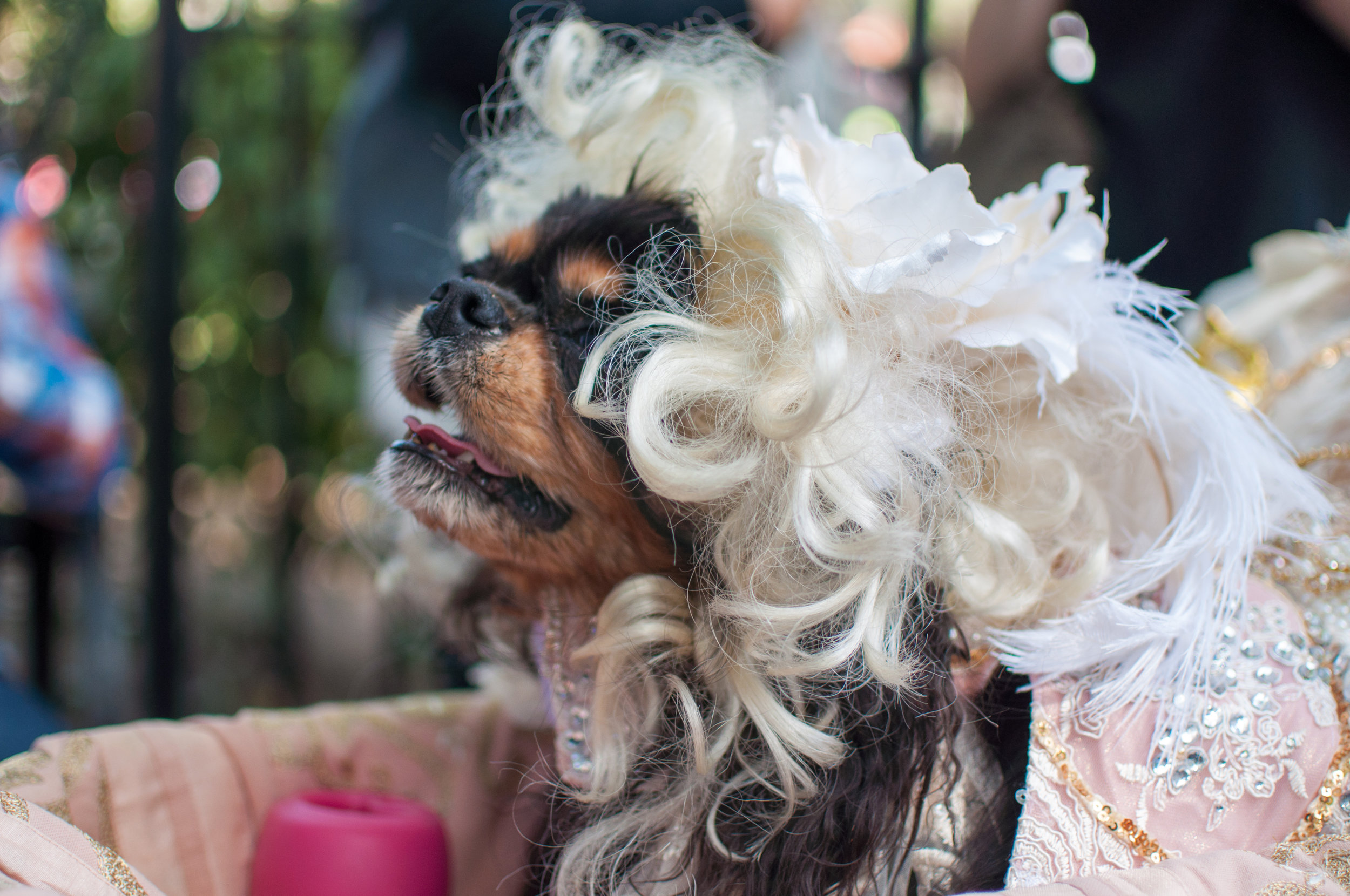 10.21.17_Tompkins Square Dog Parade-32.jpg
