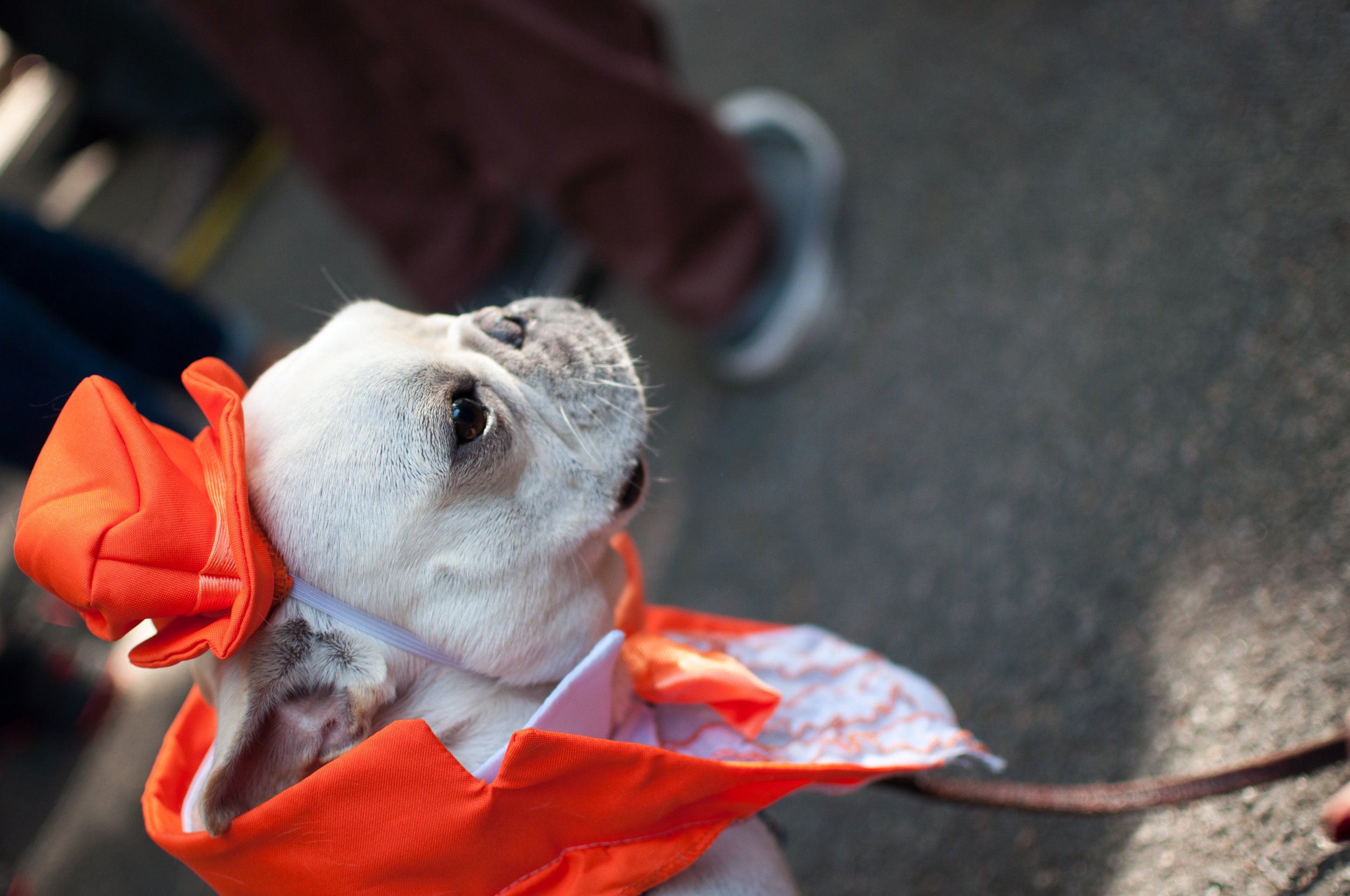 10.21.17_Tompkins Square Dog Parade-36.jpg