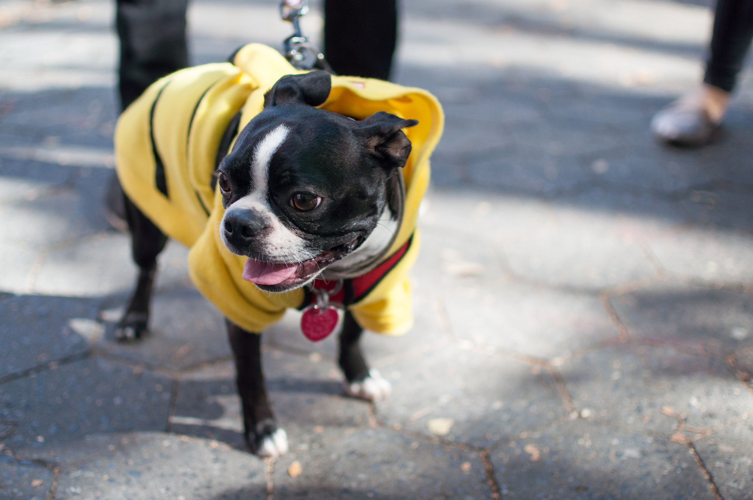 10.21.17_Tompkins Square Dog Parade-58.jpg