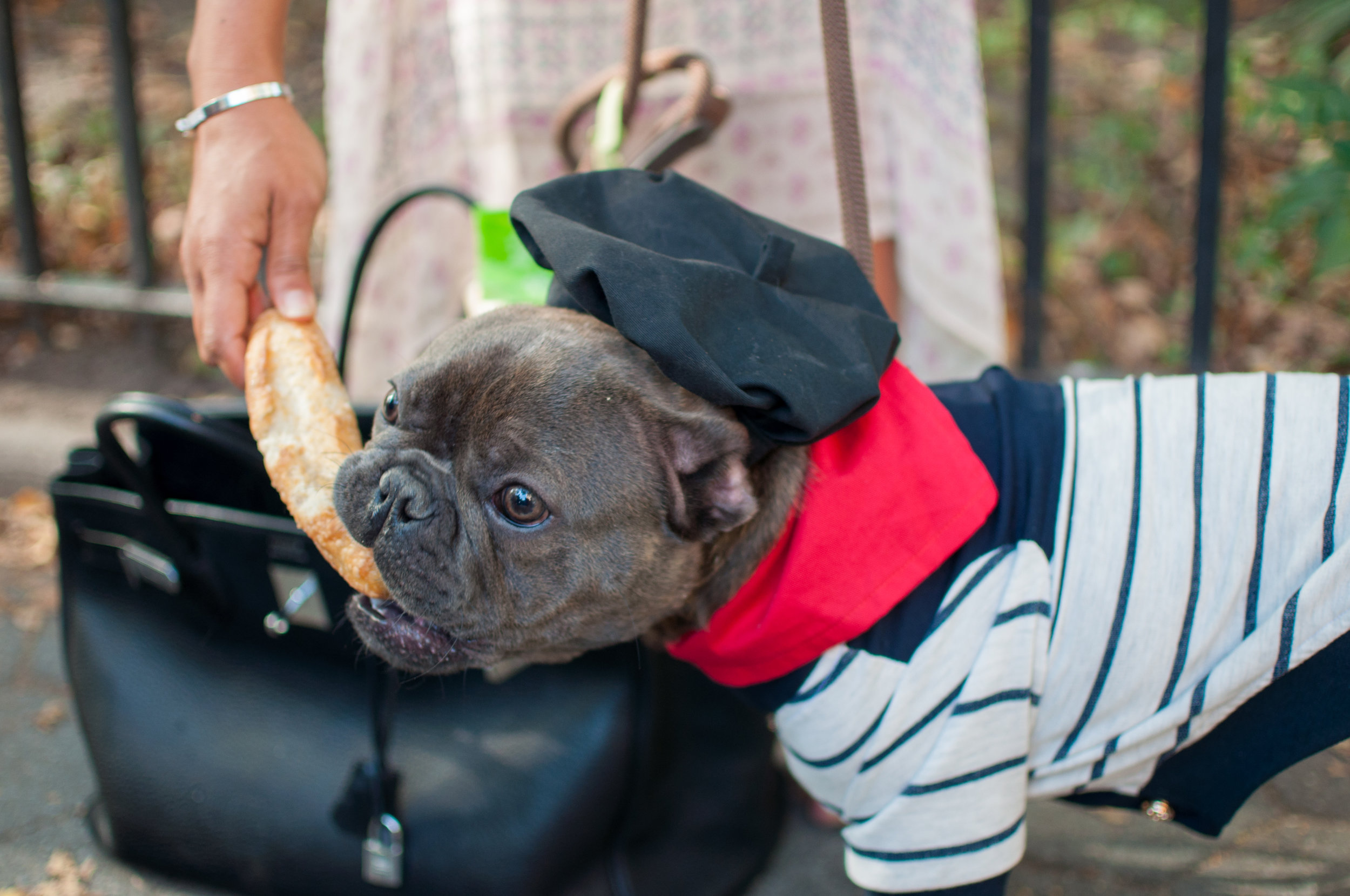 10.21.17_Tompkins Square Dog Parade-63.jpg