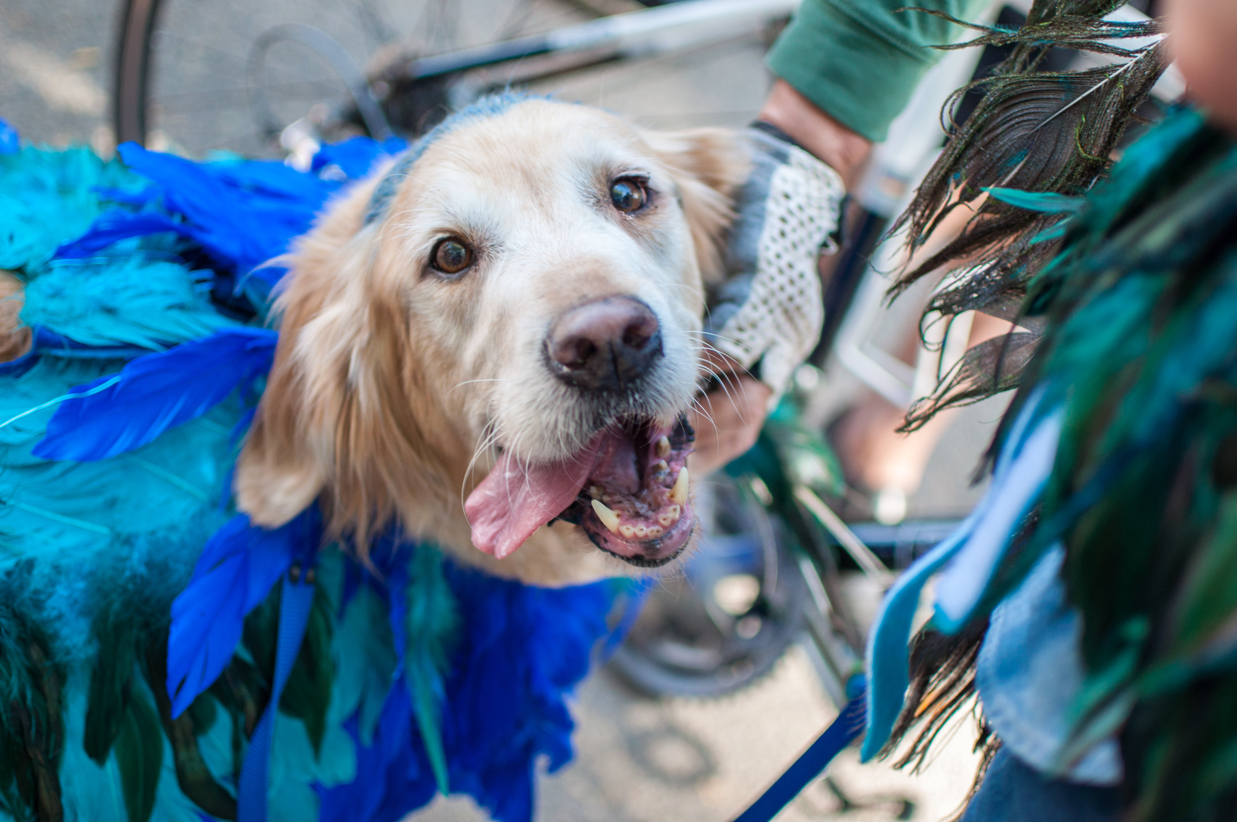 10.21.17_Tompkins Square Dog Parade-18.jpg