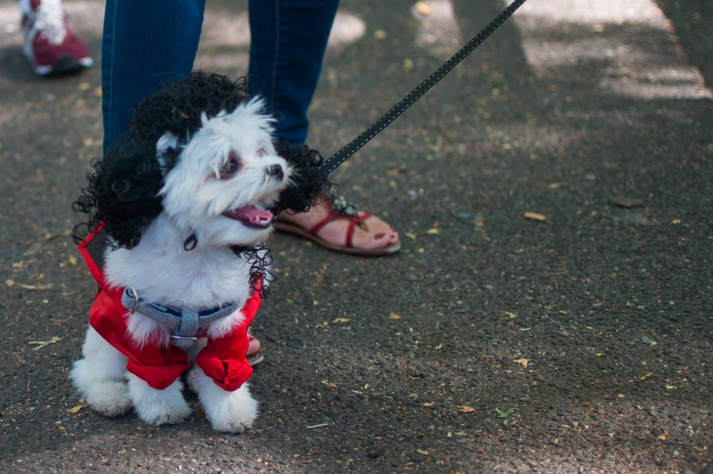 10.21.17_Tompkins Square Dog Parade-3.jpg