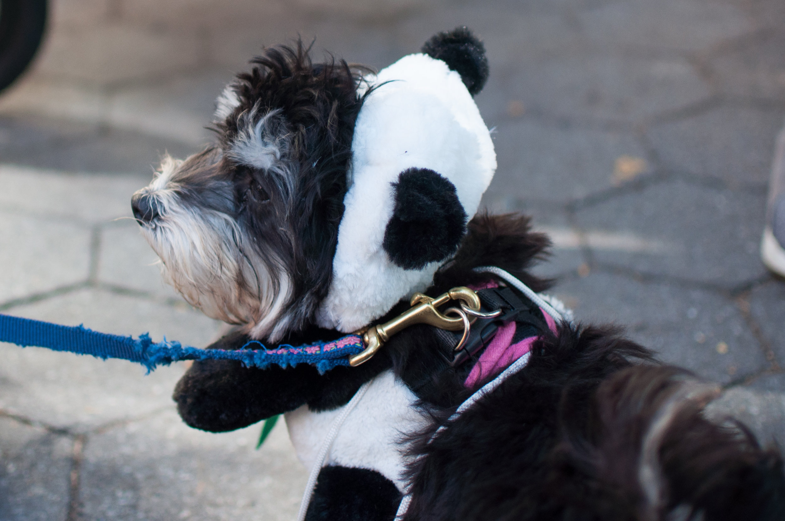 10.21.17_Tompkins Square Dog Parade-53.jpg
