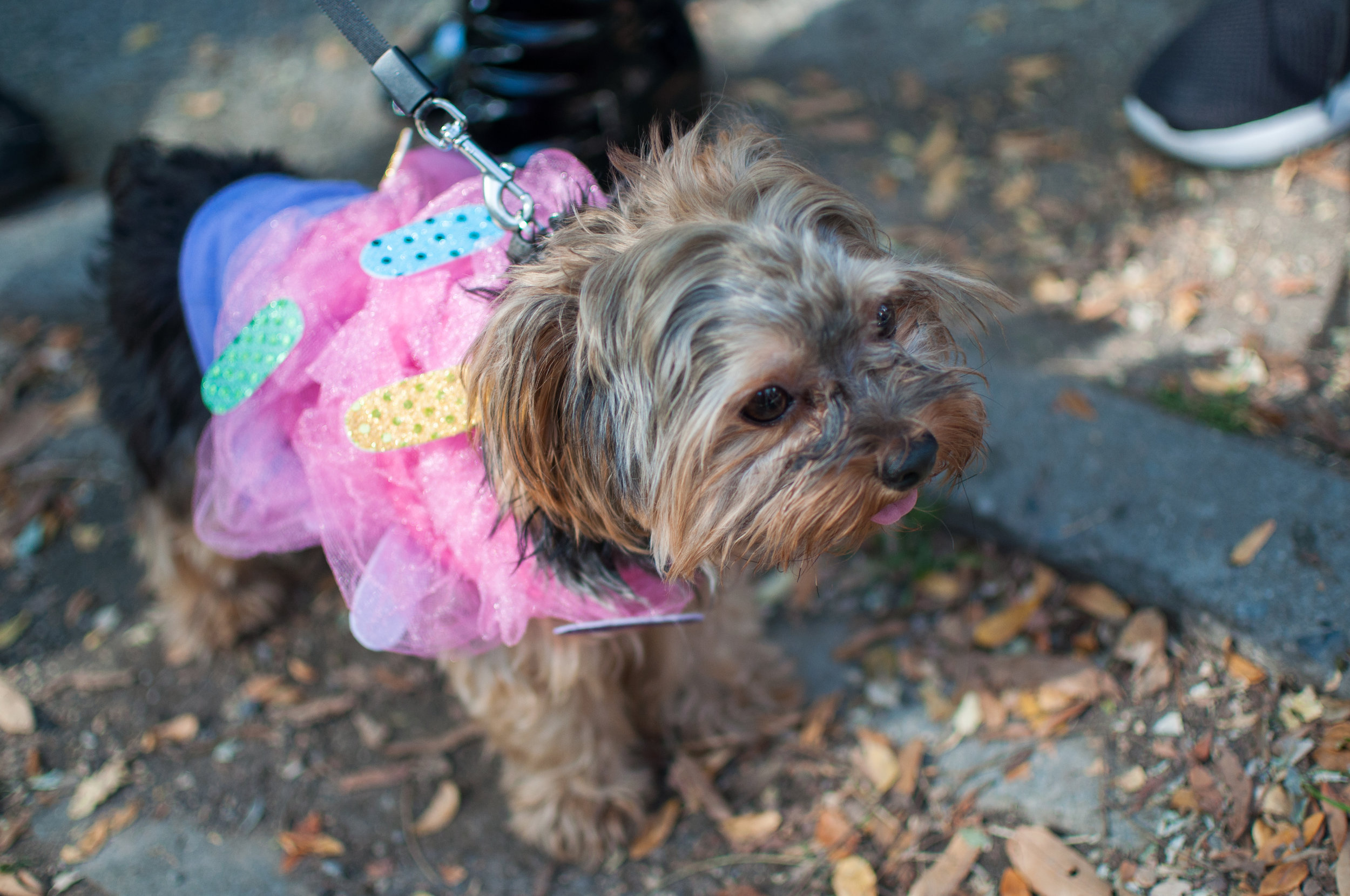 10.21.17_Tompkins Square Dog Parade-13.jpg