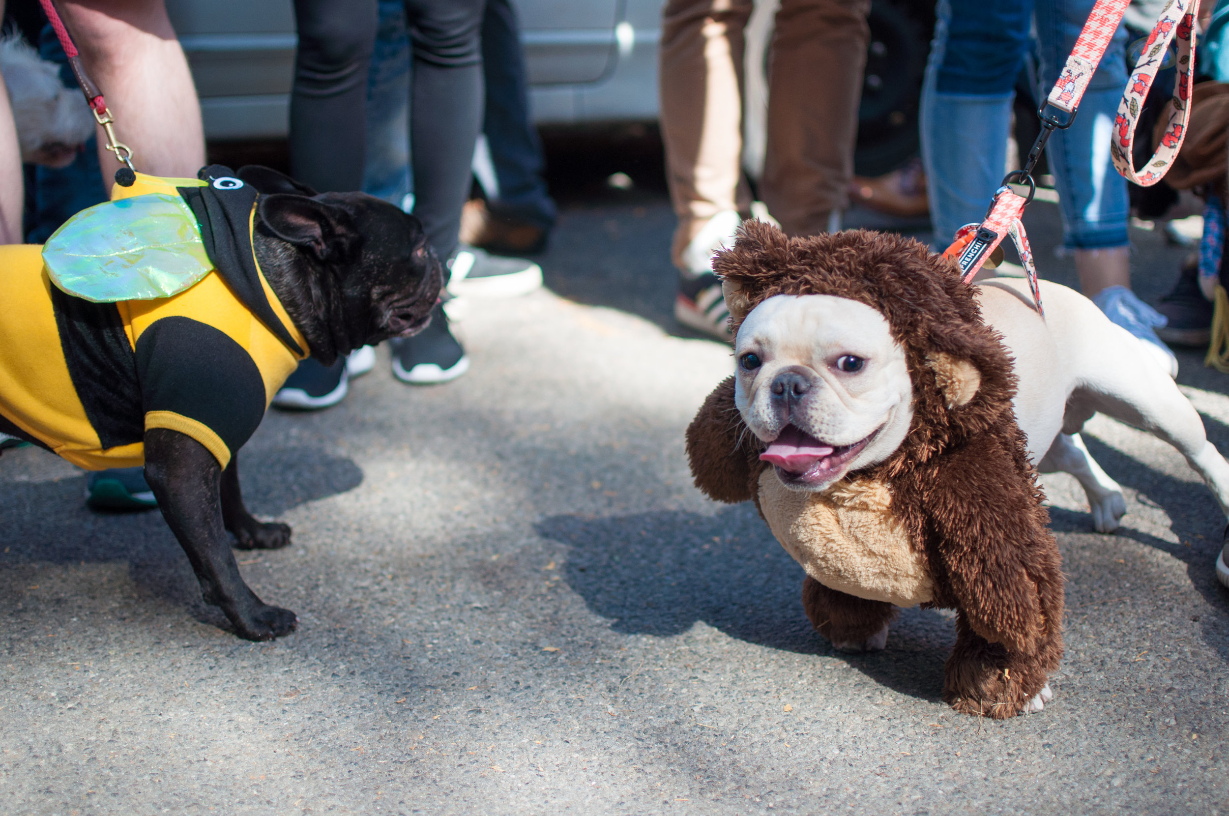 10.21.17_Tompkins Square Dog Parade-21.jpg