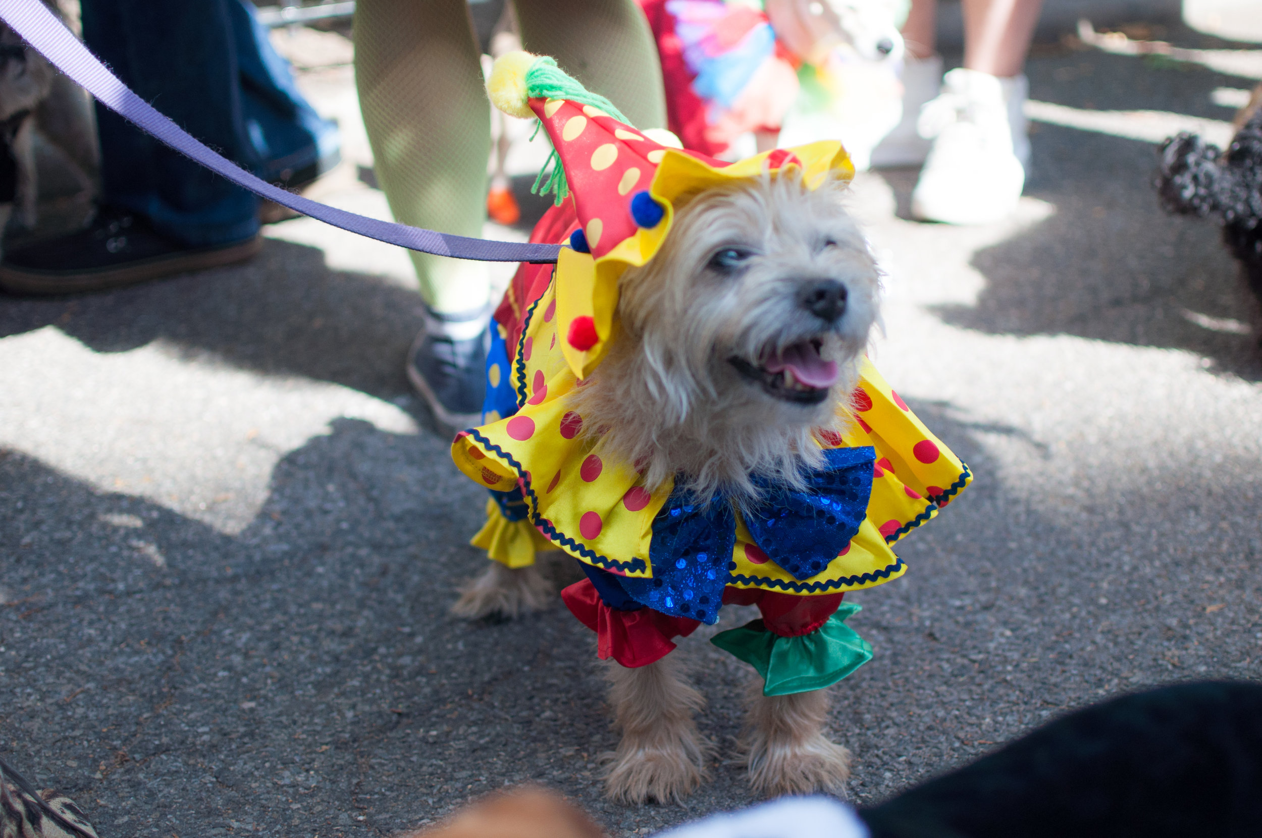 10.21.17_Tompkins Square Dog Parade-28.jpg