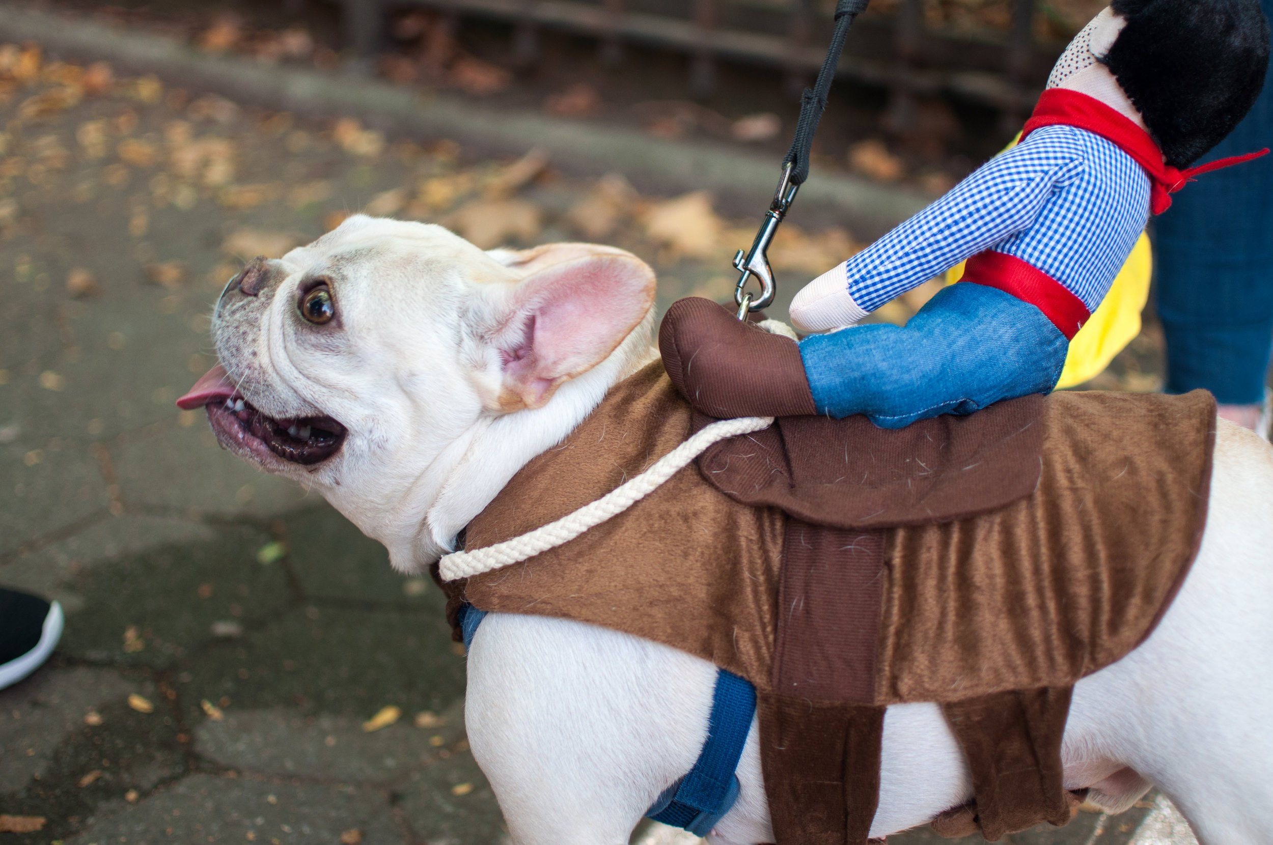 10.21.17_Tompkins Square Dog Parade-55.jpg