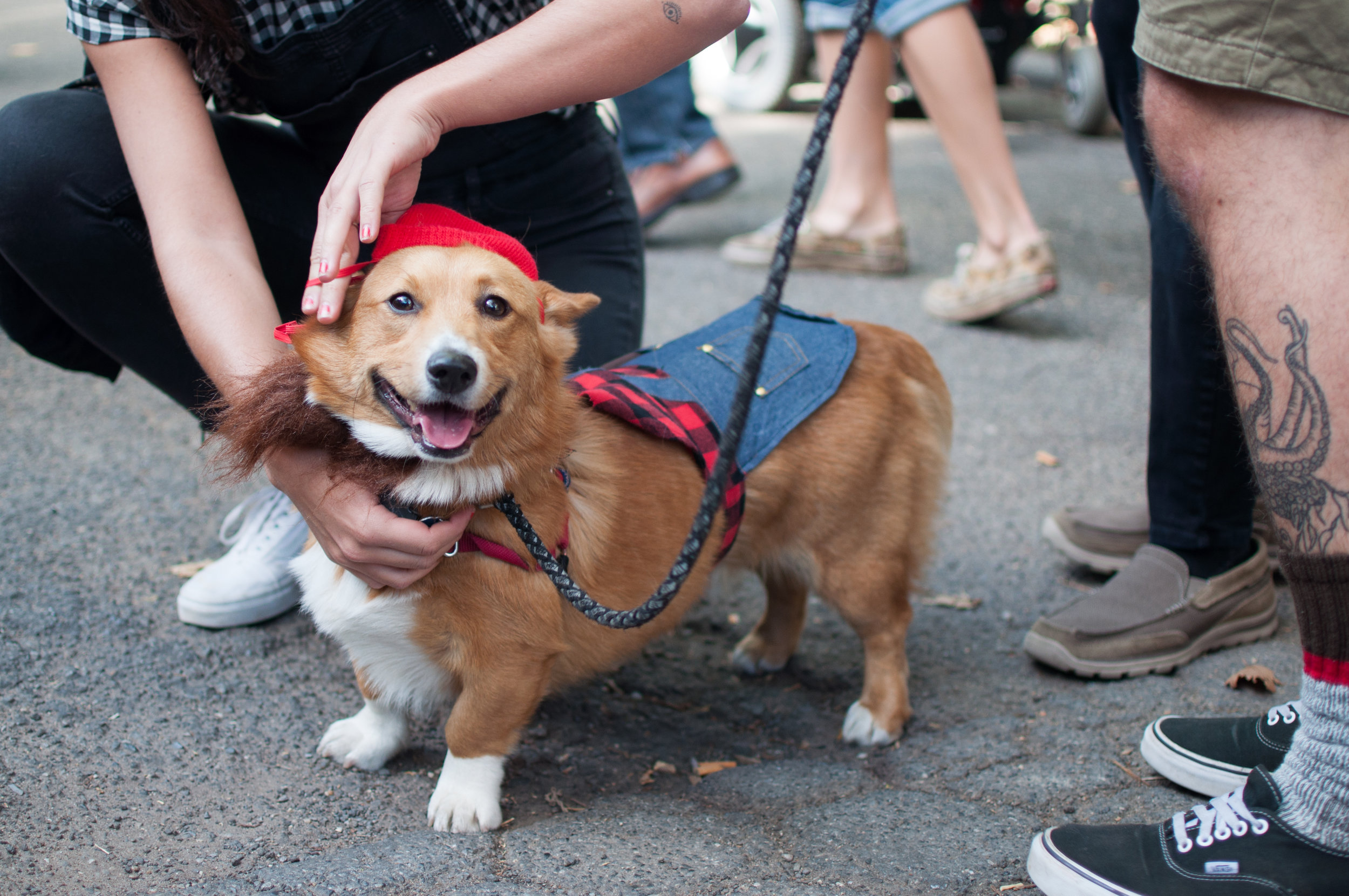 10.21.17_Tompkins Square Dog Parade-59.jpg