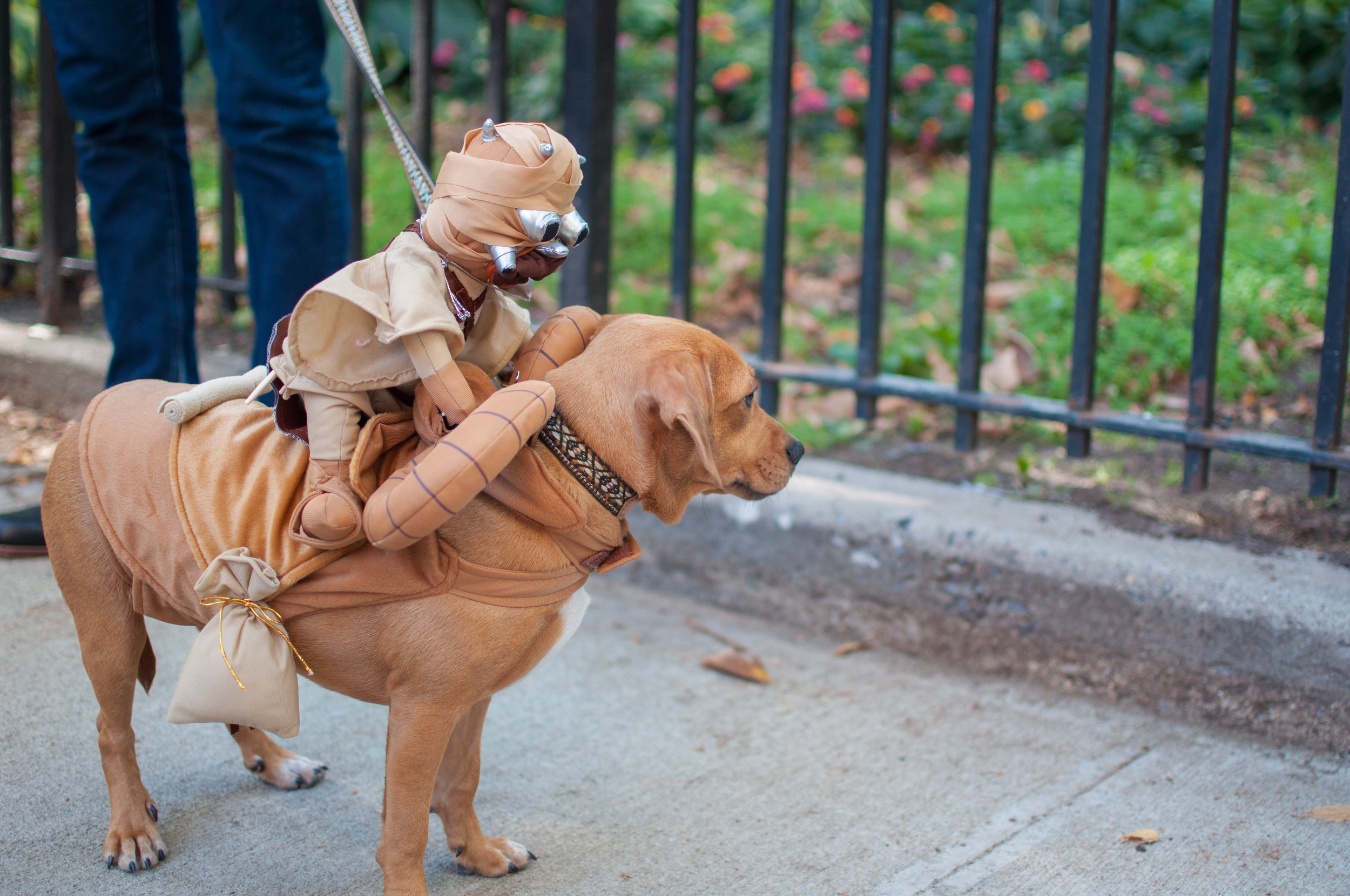 10.21.17_Tompkins Square Dog Parade-61.jpg