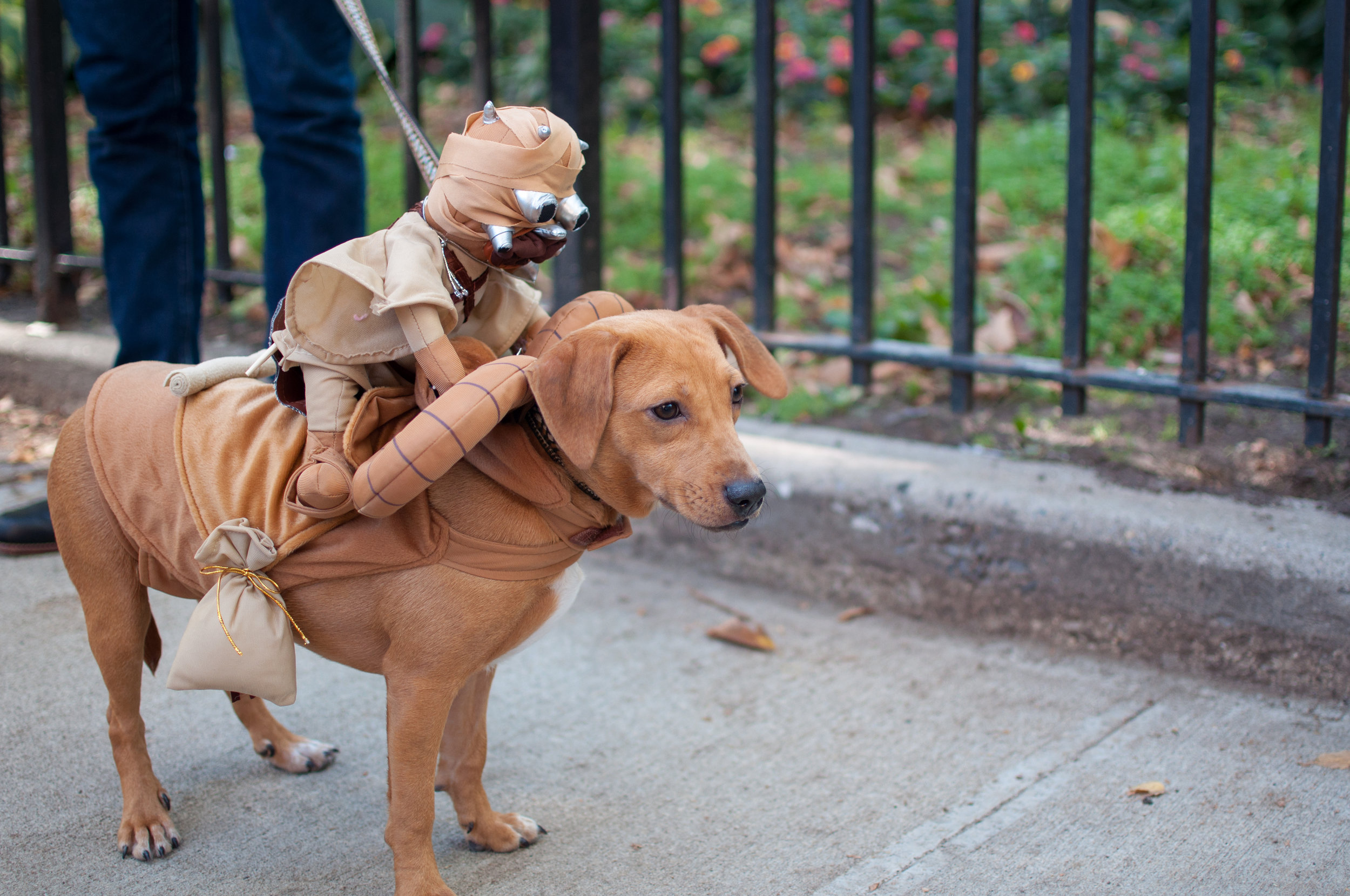 10.21.17_Tompkins Square Dog Parade-62.jpg