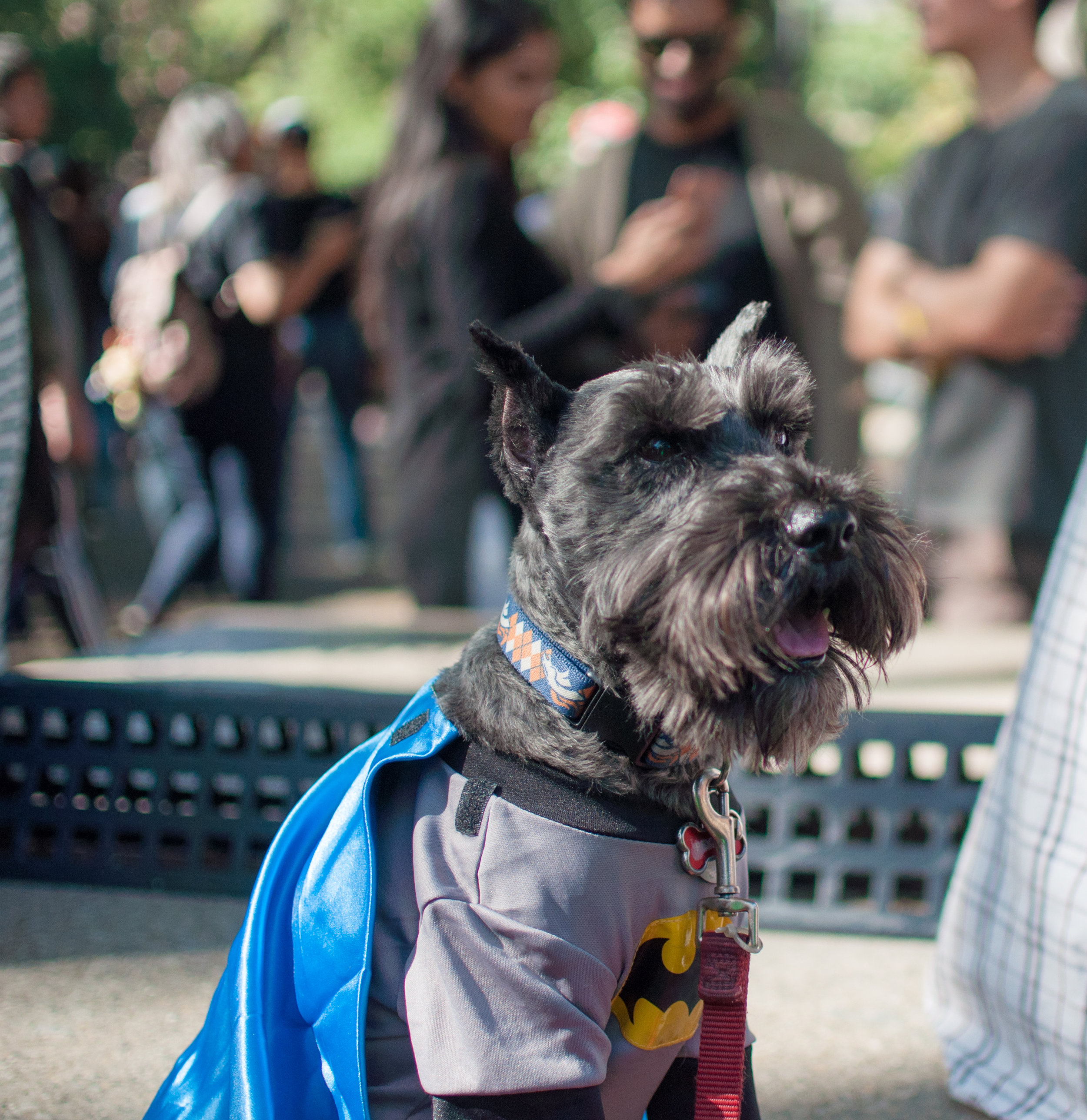 10.21.17_Tompkins Square Dog Parade-17.jpg
