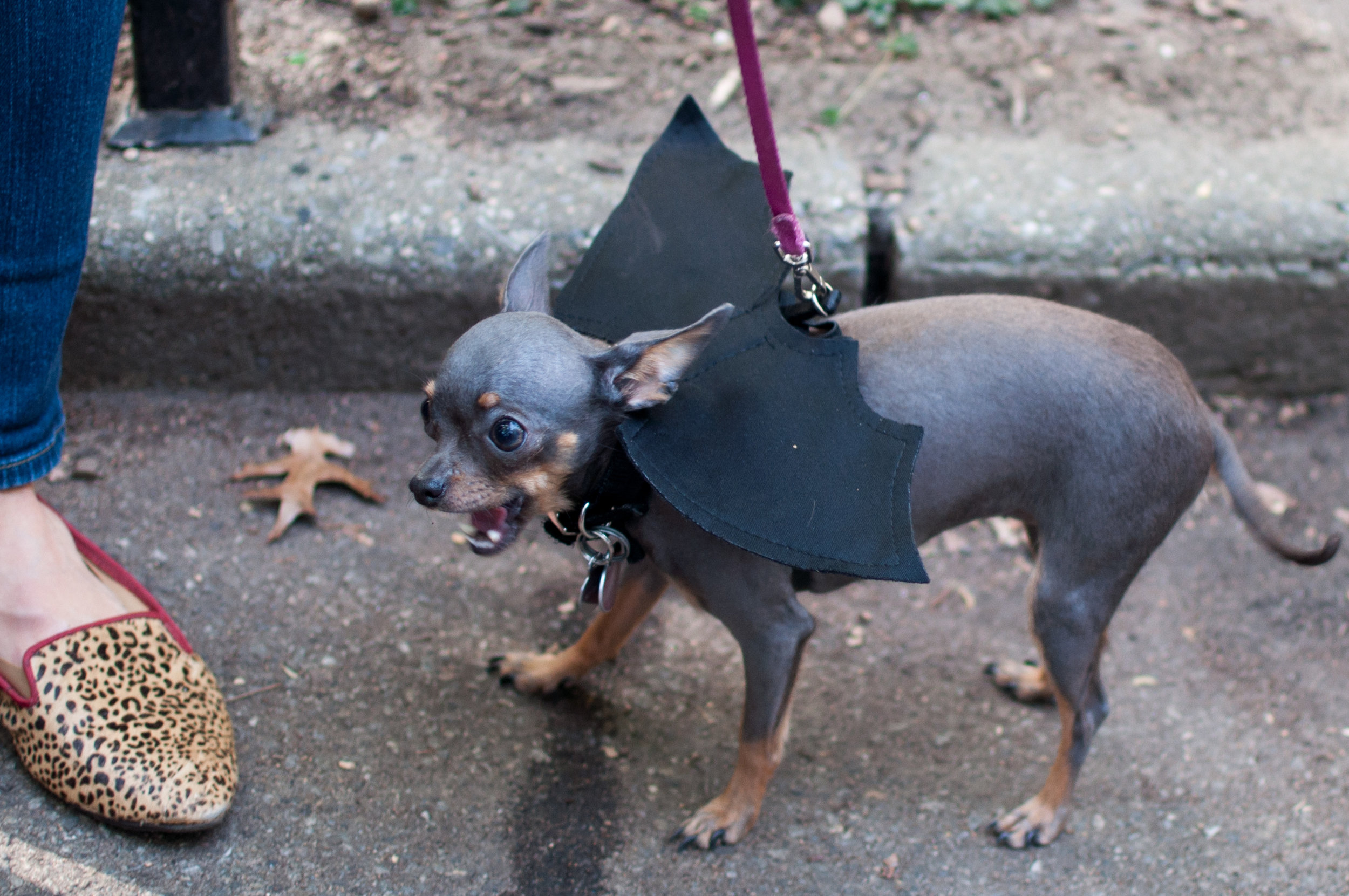 10.21.17_Tompkins Square Dog Parade-37.jpg