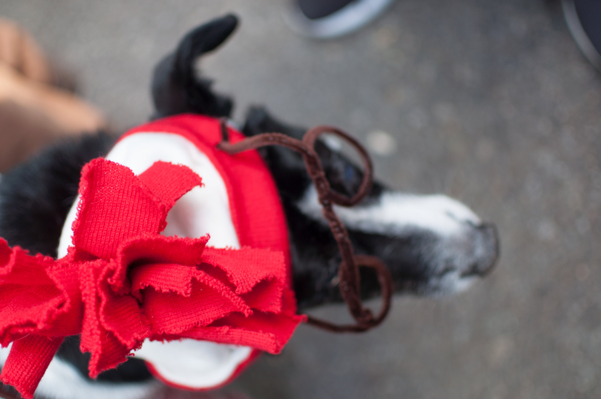 10.21.17_Tompkins Square Dog Parade-26.jpg