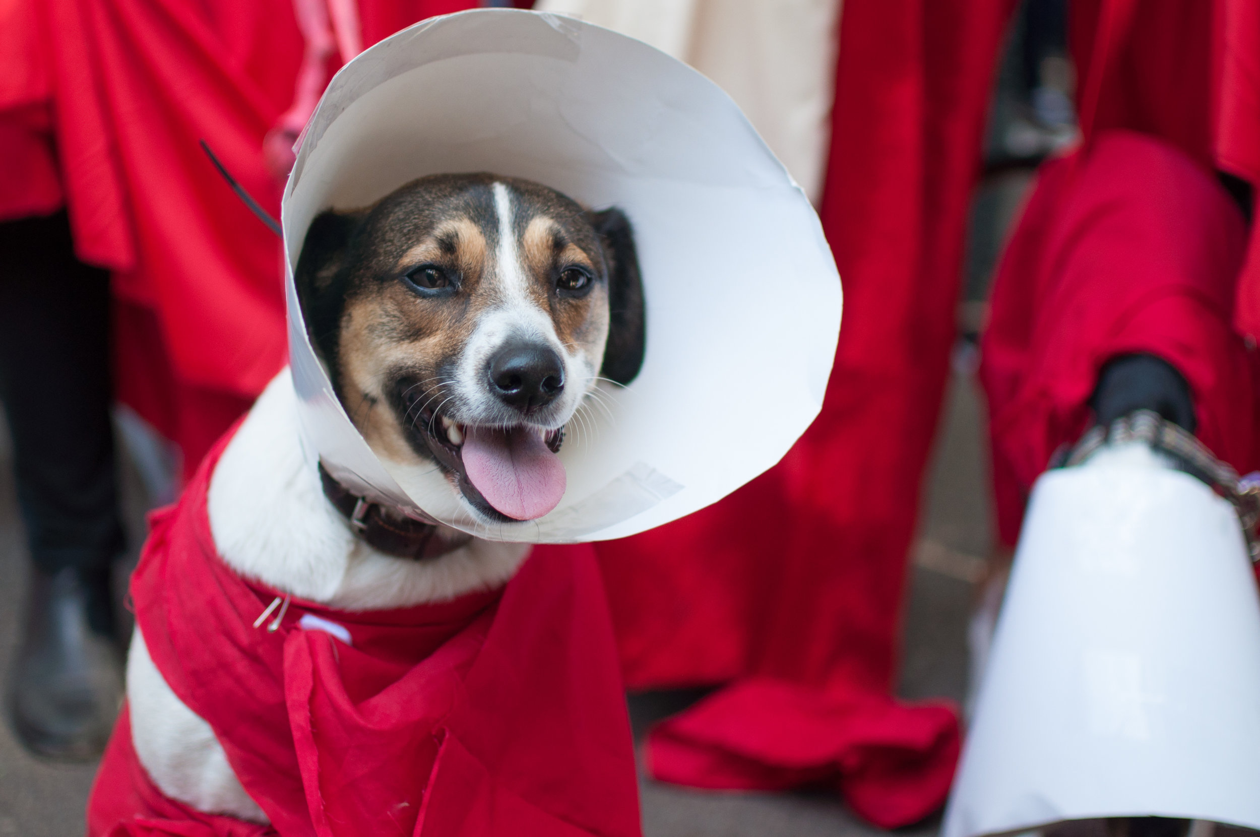 10.21.17_Tompkins Square Dog Parade-34.jpg