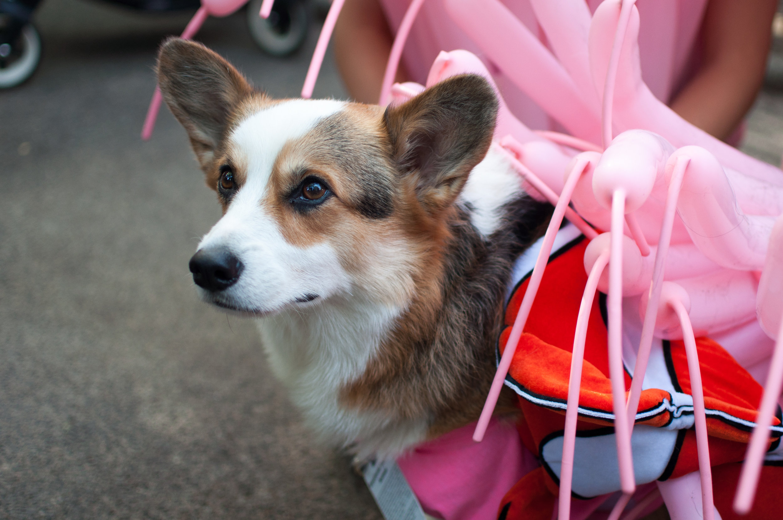 10.21.17_Tompkins Square Dog Parade-39.jpg