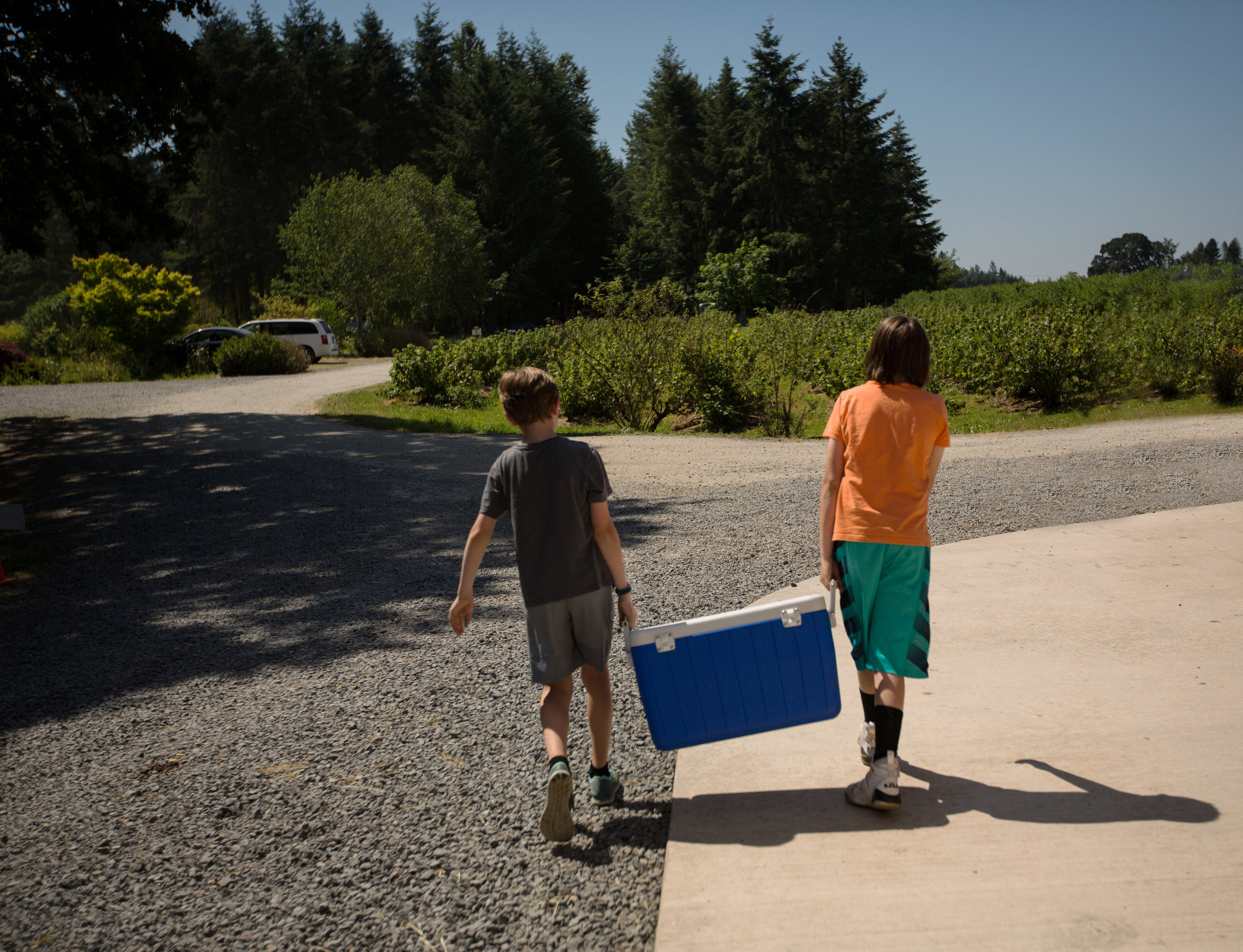 boys carrying cooler full of blueberries to car