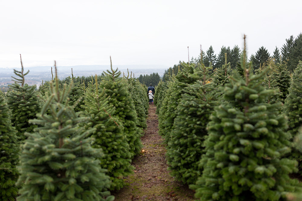 girl looking back through row of christmas trees
