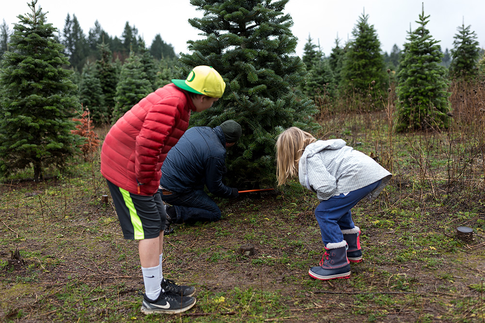 boy girl and dad selecting and cutting a christmas tree