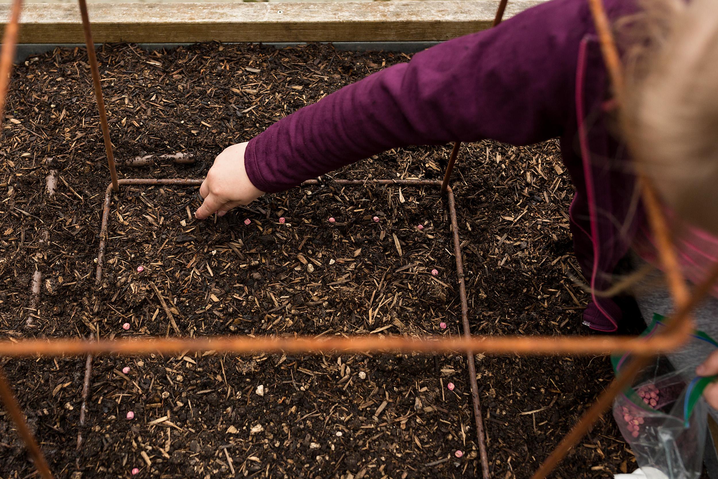 girl plants pea seeds in garden bed