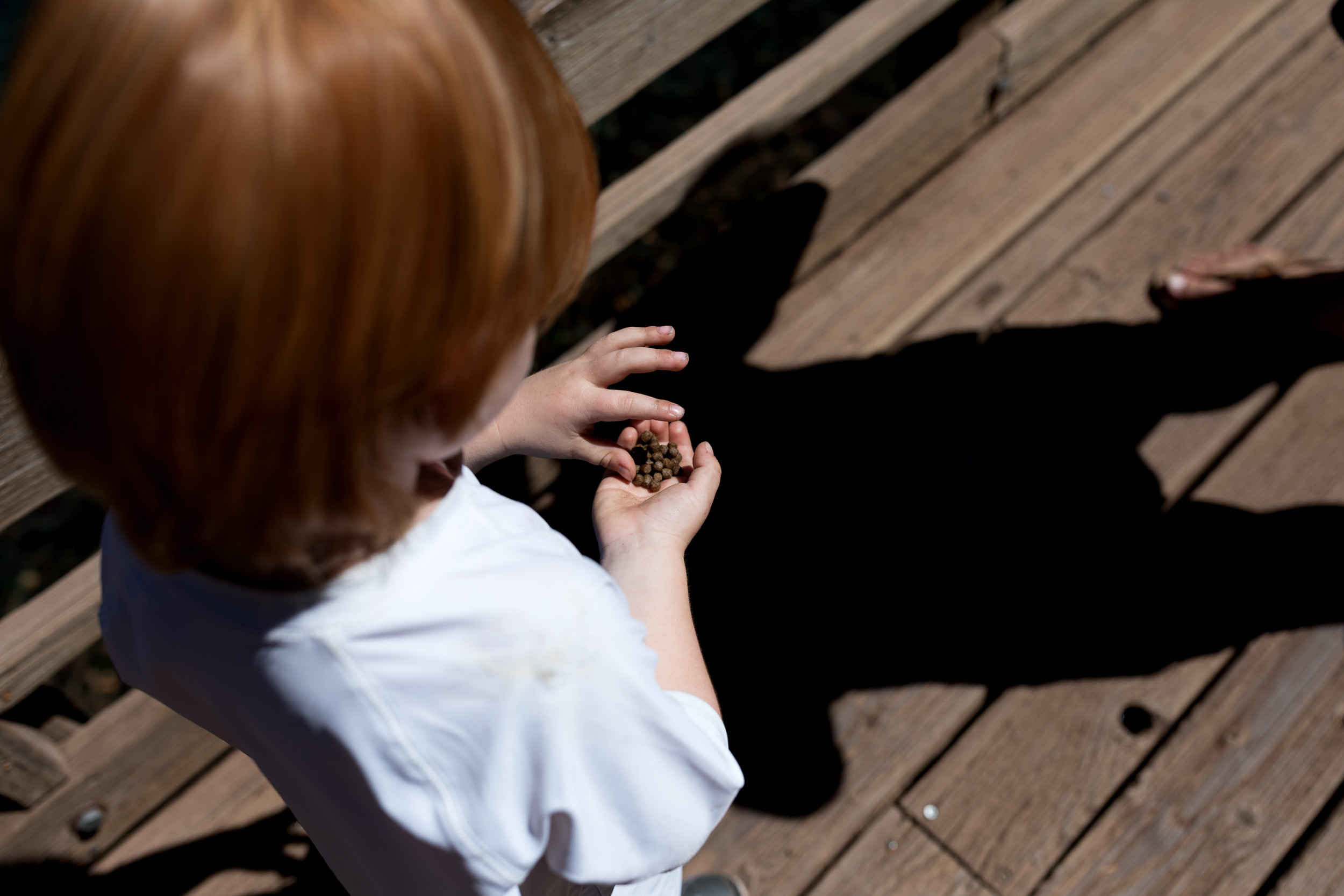 boy holding fish food pellets at the fish hatchery