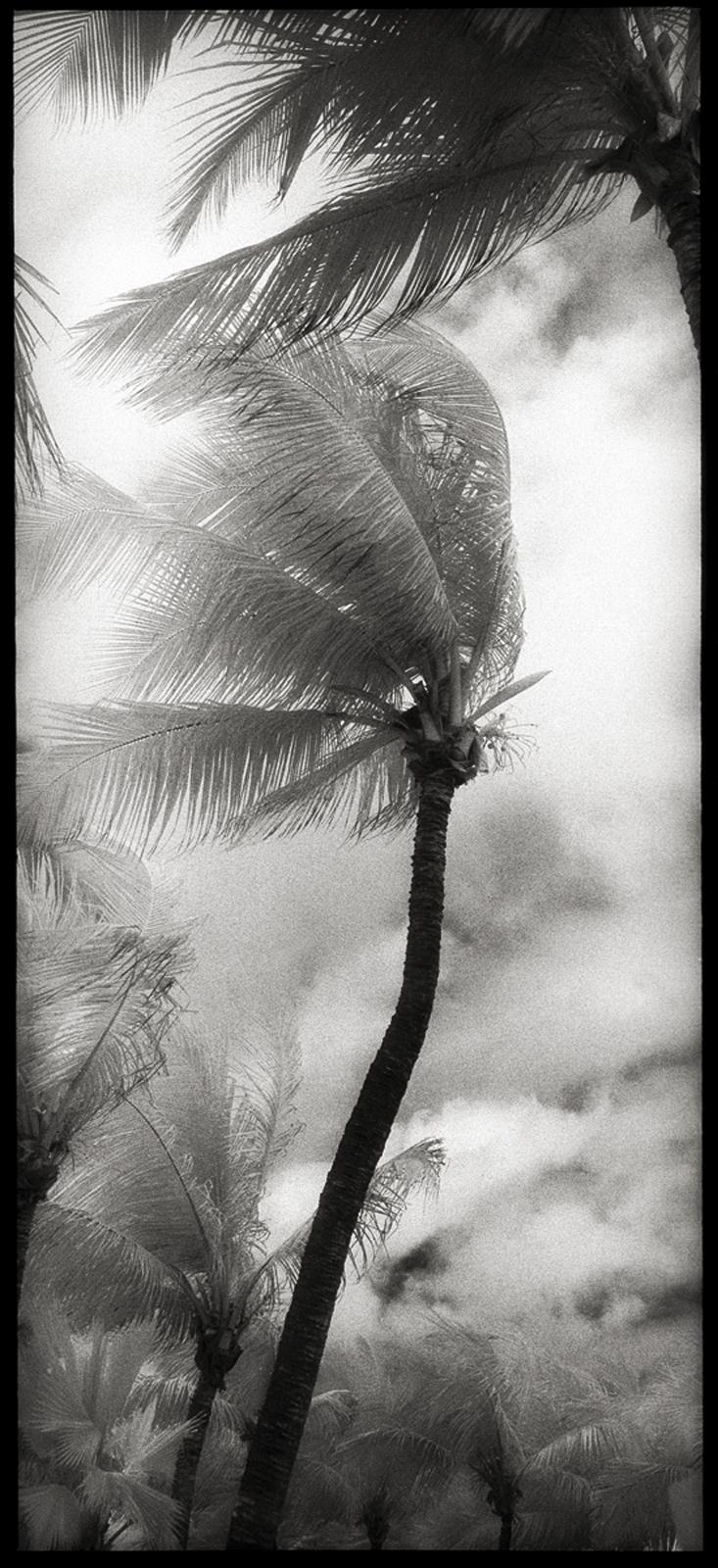 palm wind dubai.jpg