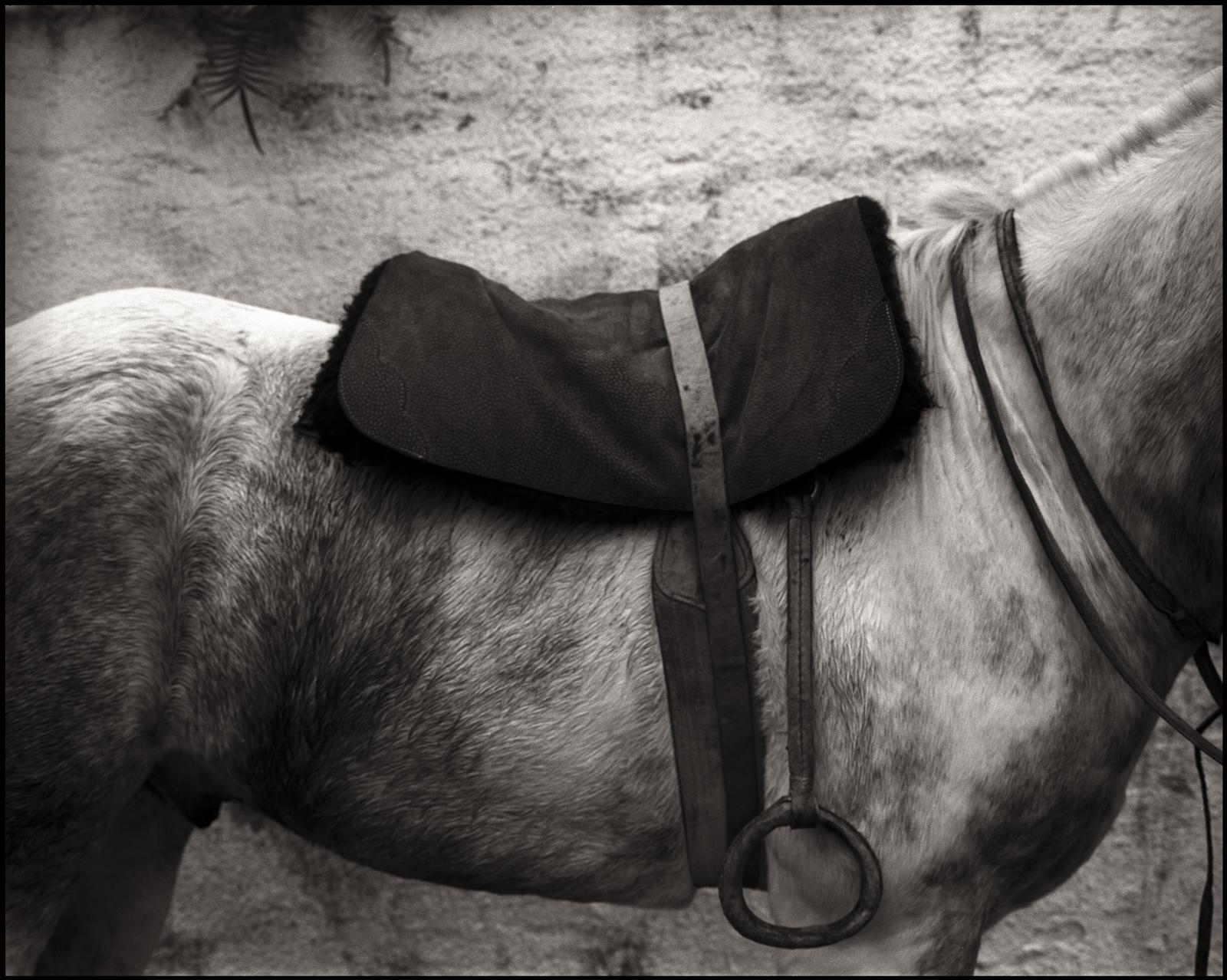 saddle 3 orginal2015.jpg