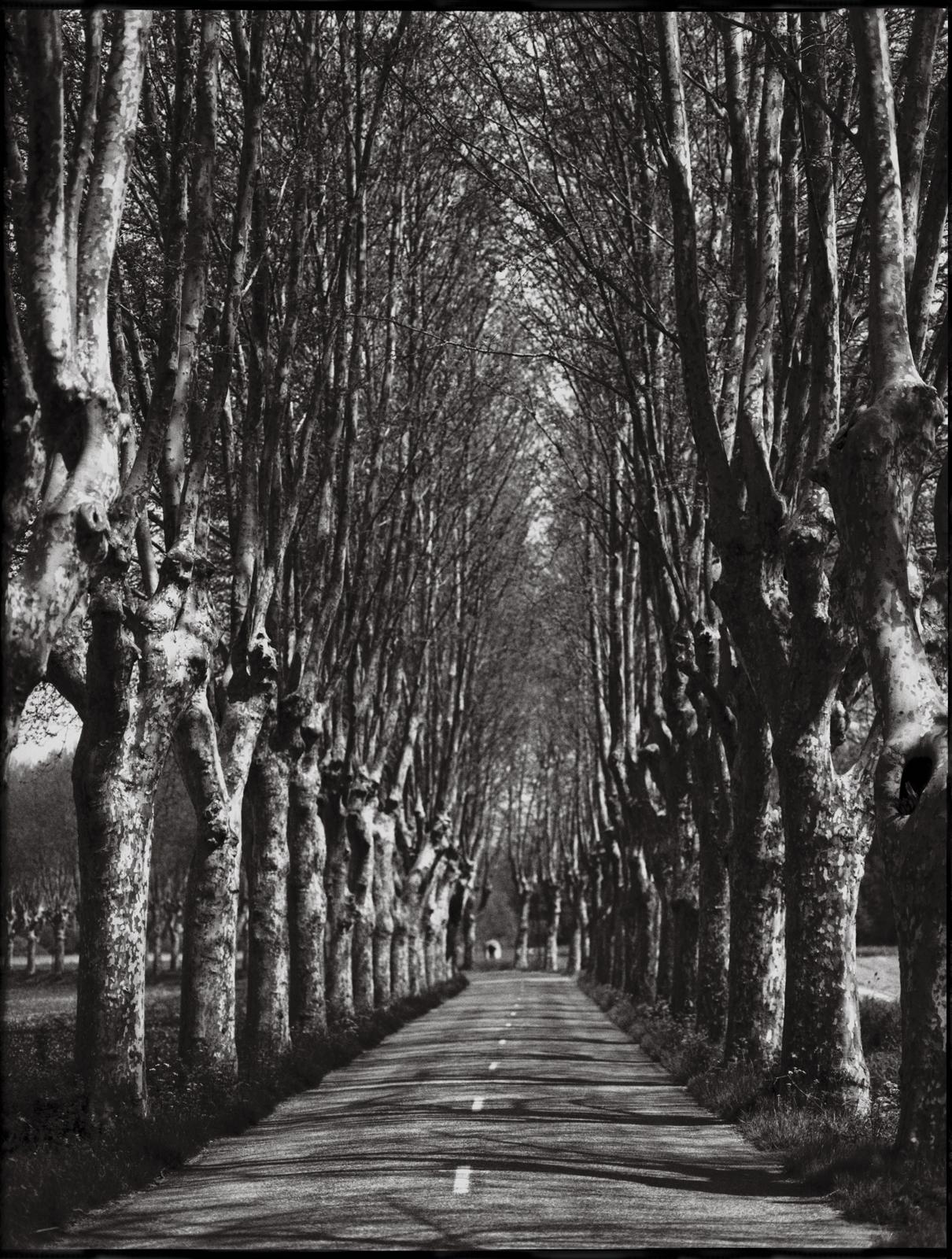 tree lined road1.jpg