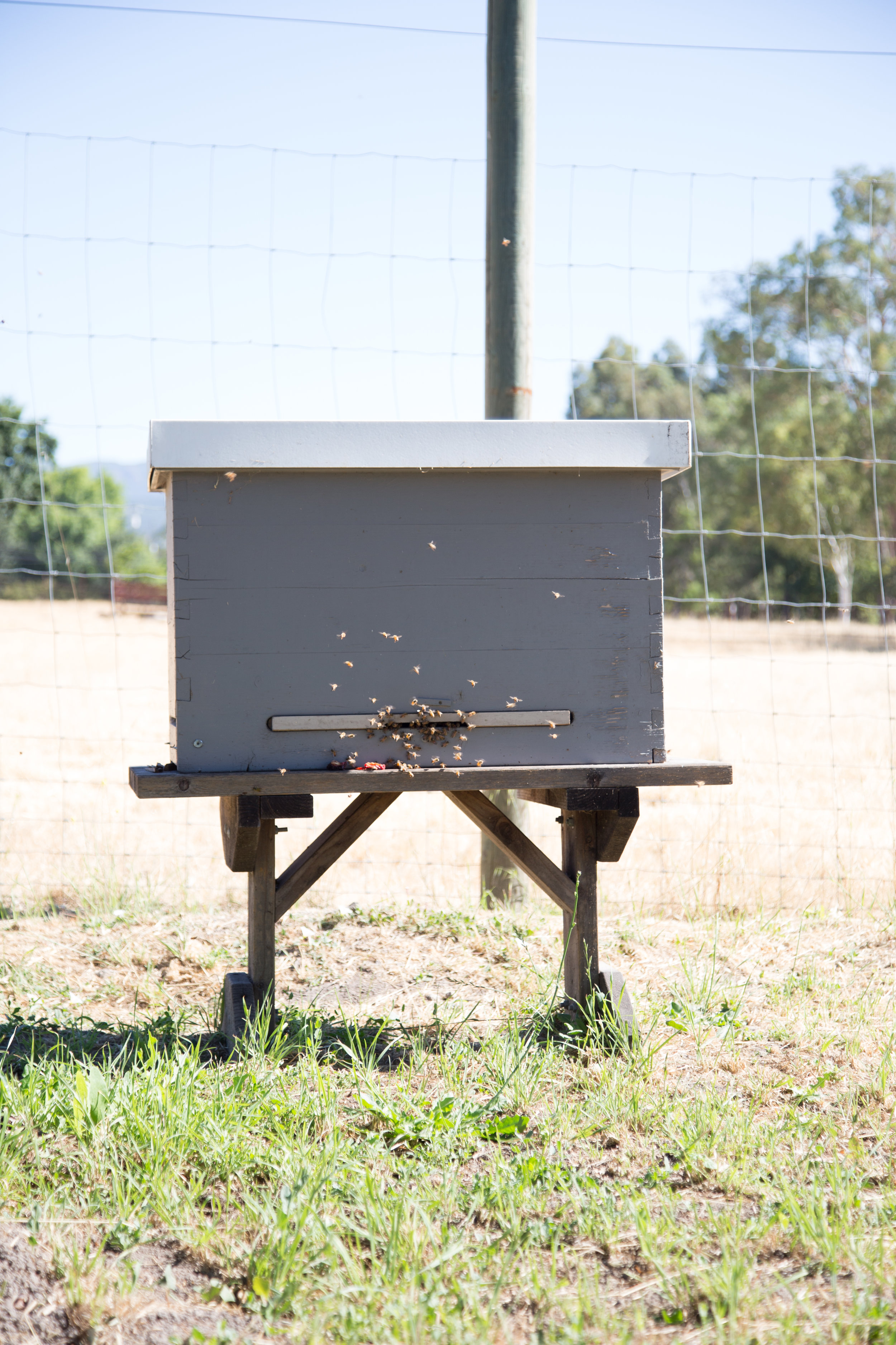 Save the bees! Read all about the benefits of raw honey! | chateausonoma.com