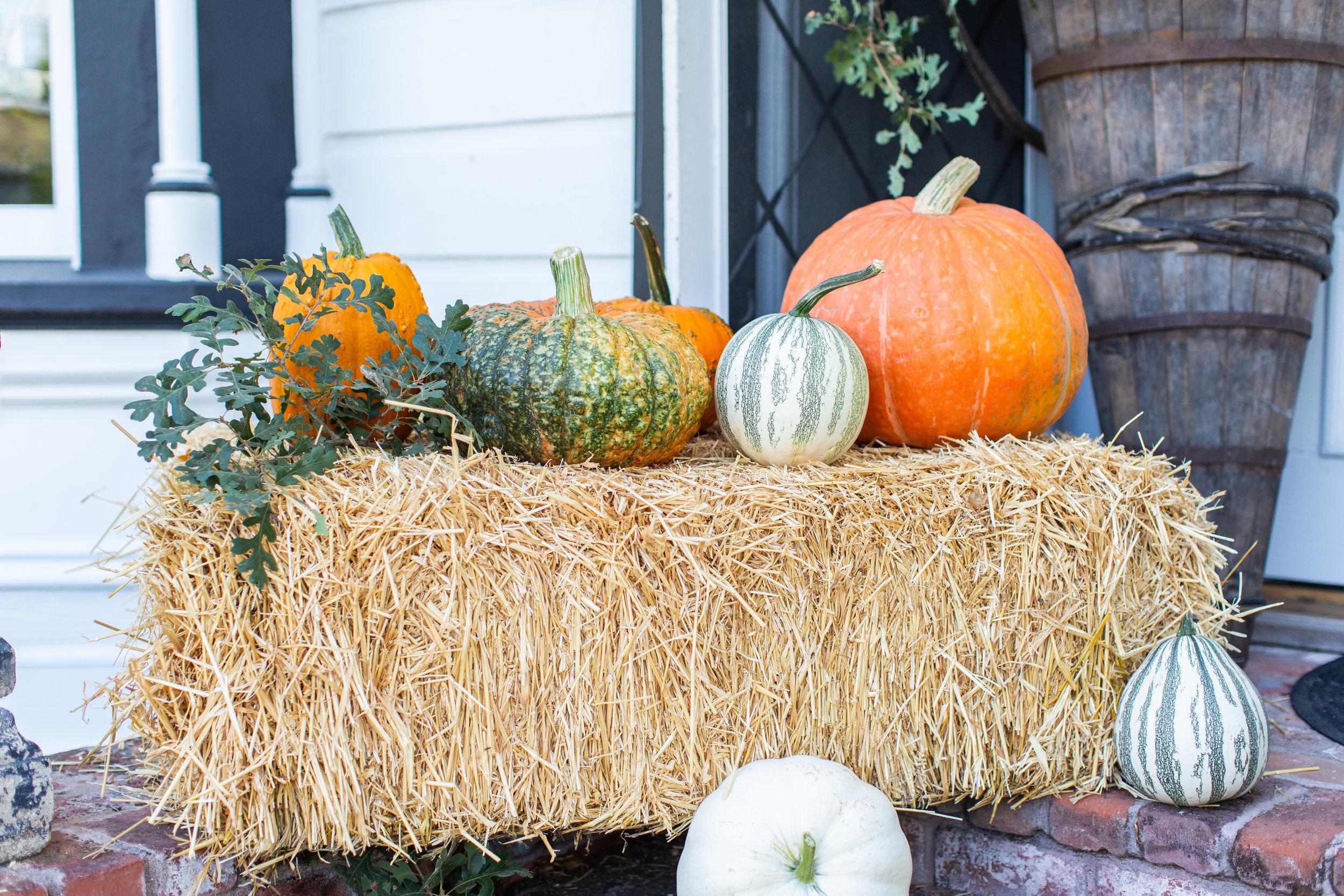 Chateau Sonoma, Sonoma, California, Antiques, Home Decor, Fall, Autumn, Farm, Chateau Sonoma Farm, Pumpkins, Fall Decor, Pumpkin Patch, Wine Country, Cornerstone Sonoma