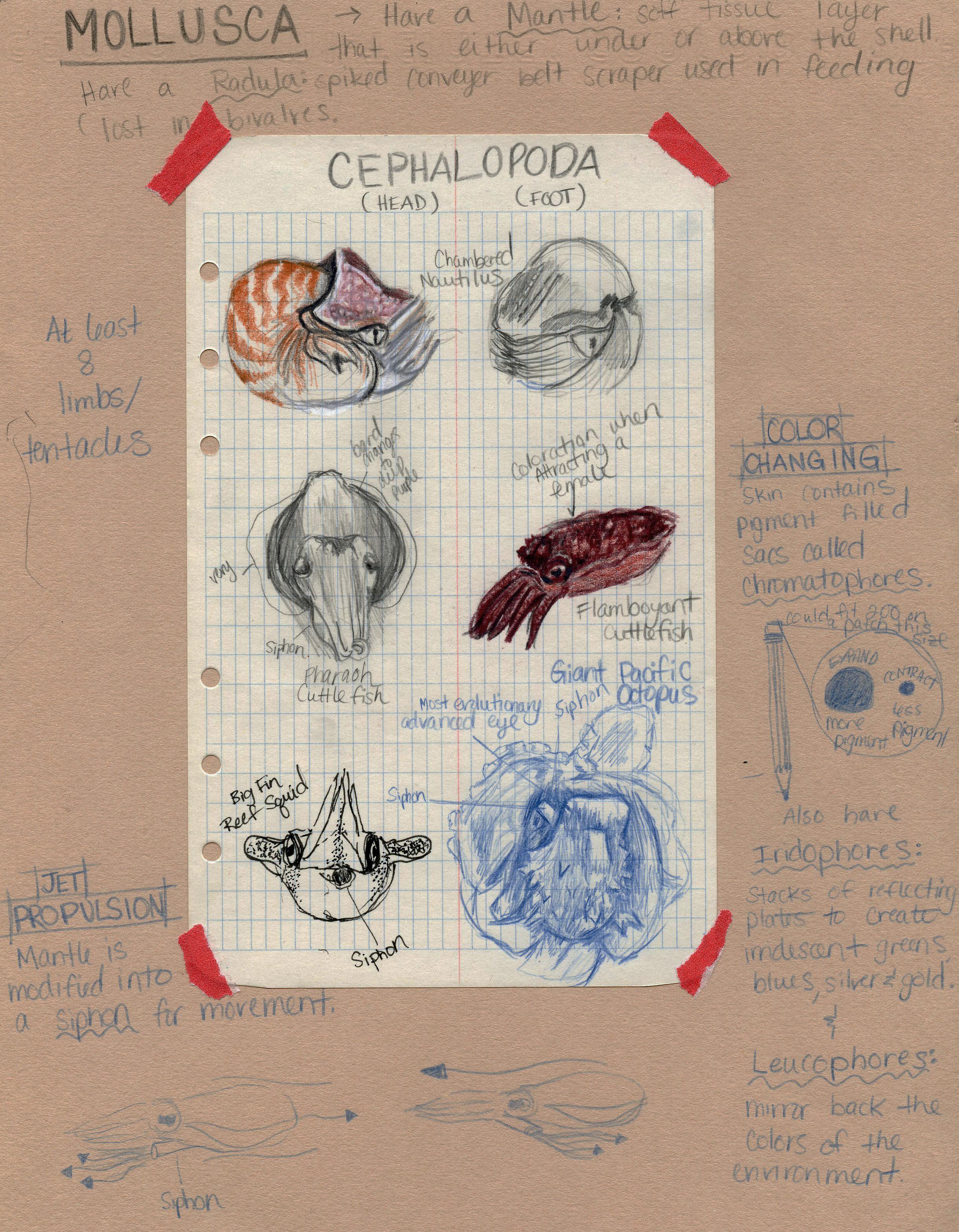 Chart of Molluscs & Characteristics
