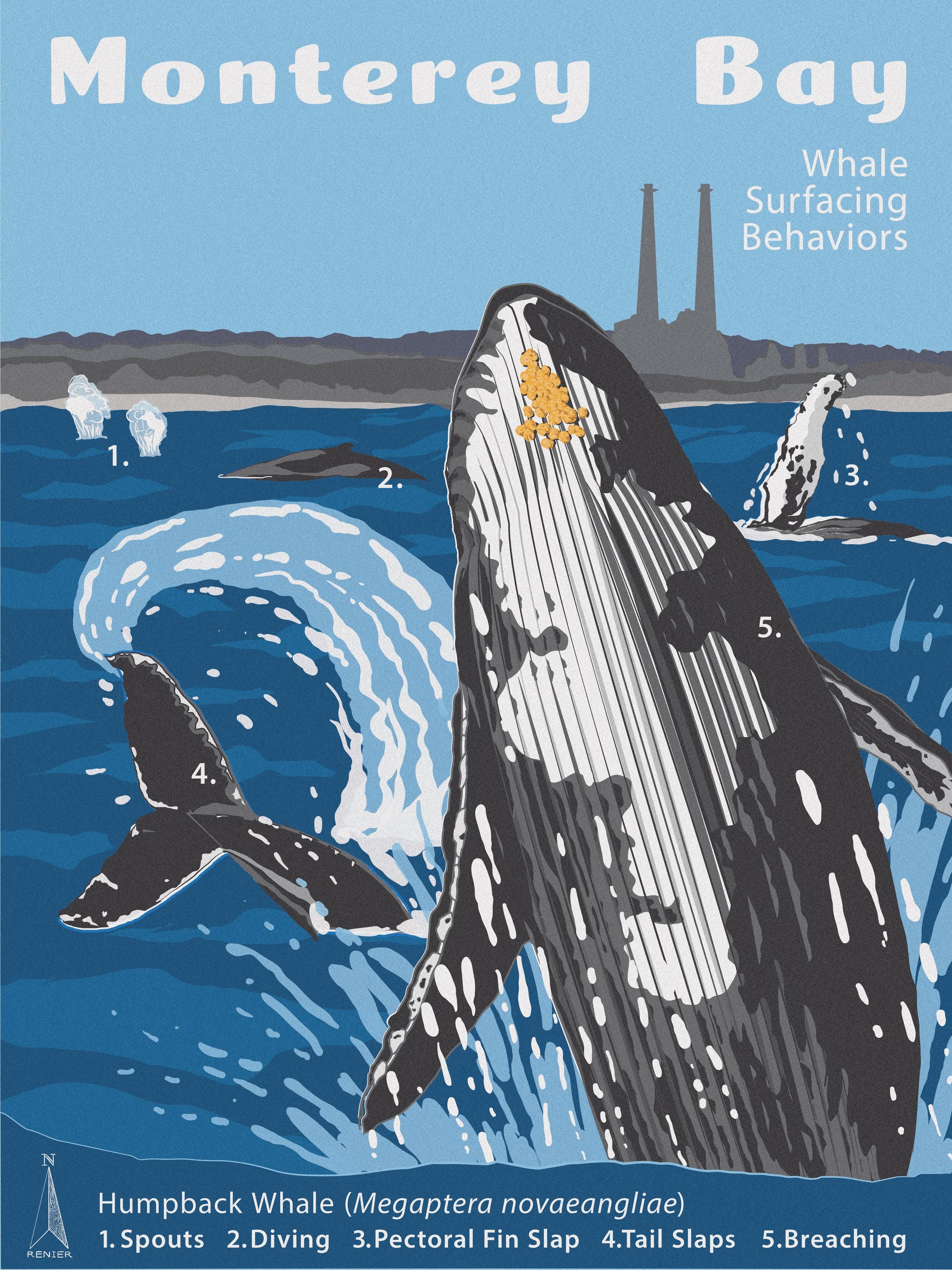 Humpback Surfacing Behaviors in Monterey Bay