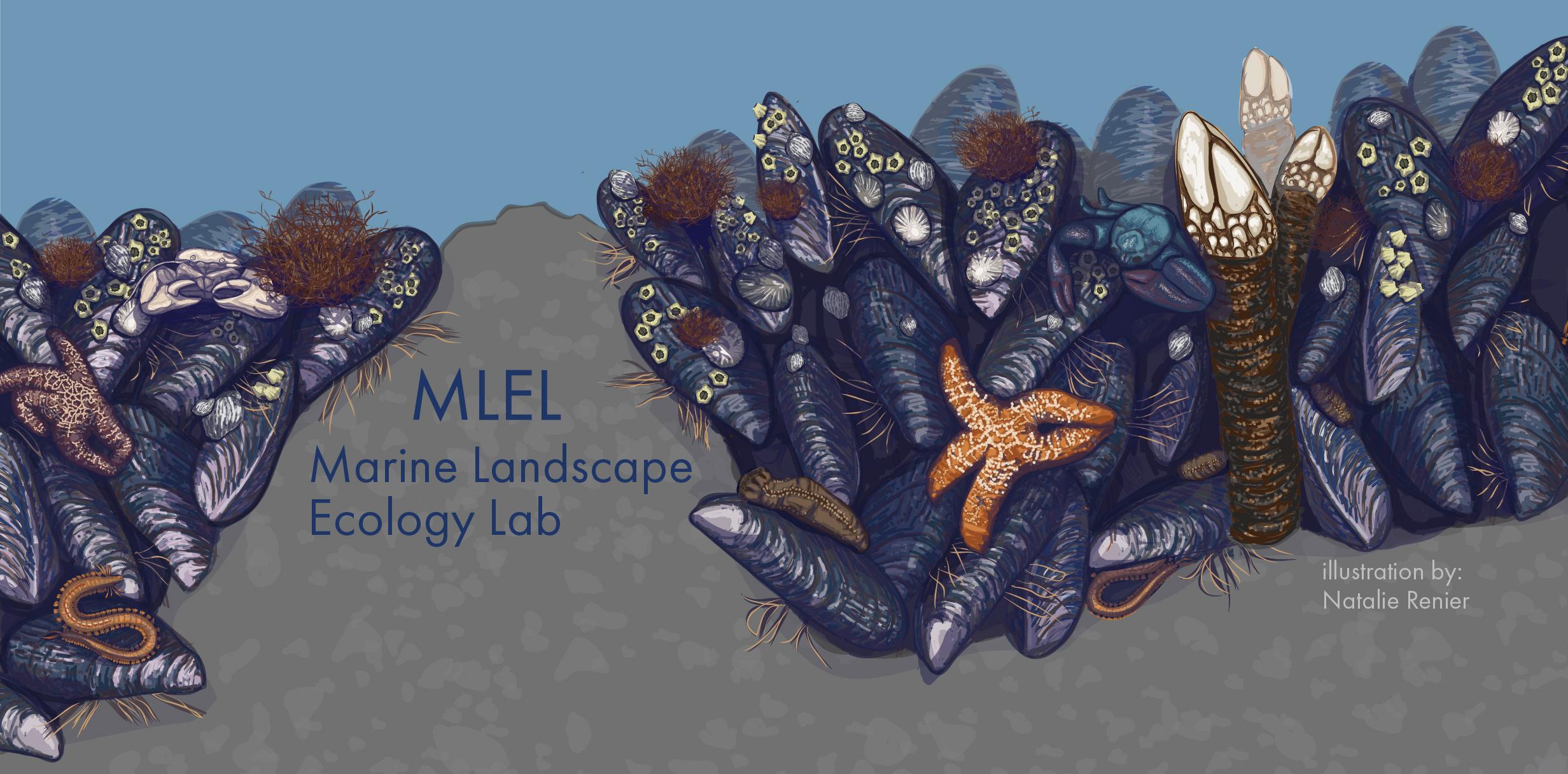 Mussel-bed Matrix (Hero Image for Website)