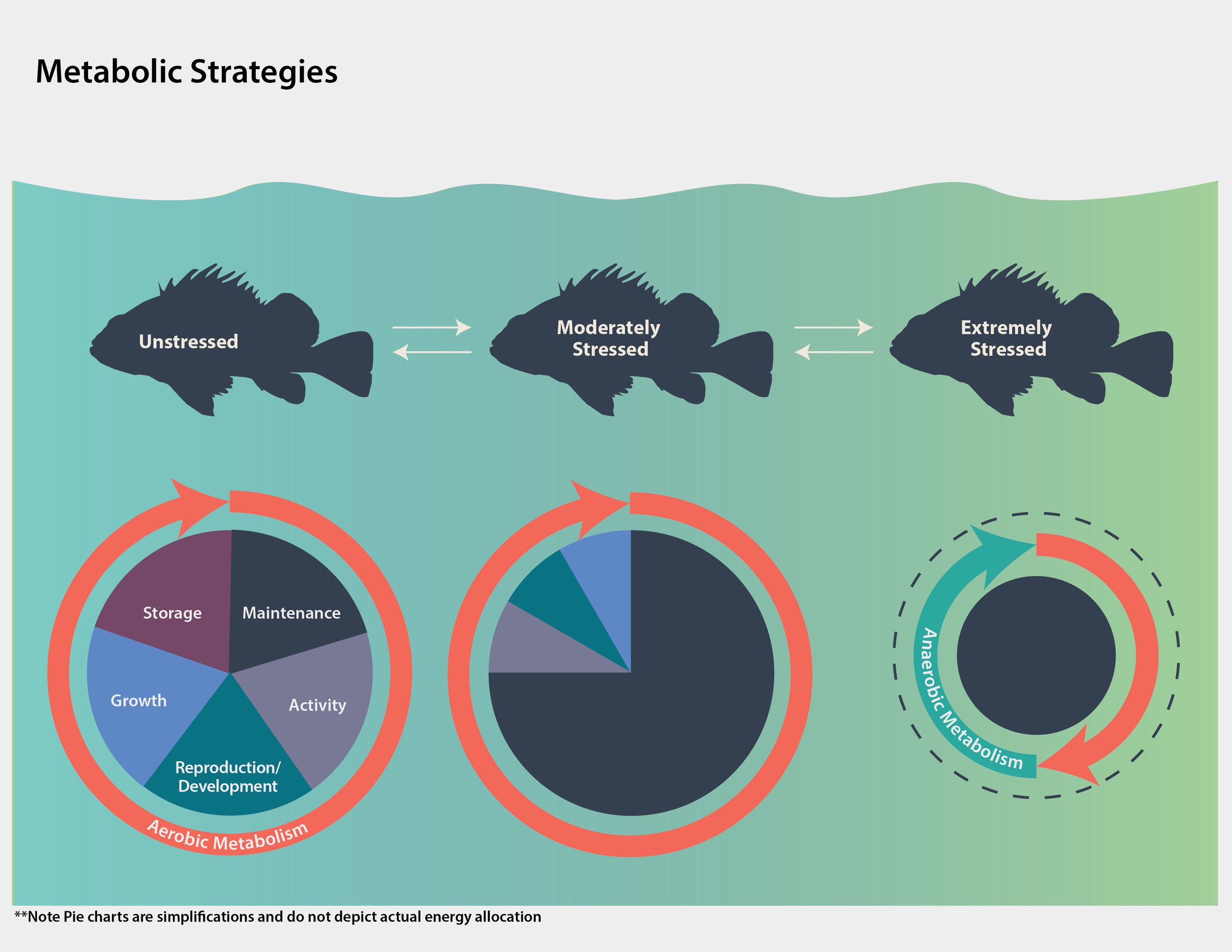 Metabolic Strategies of Brown Rockfish