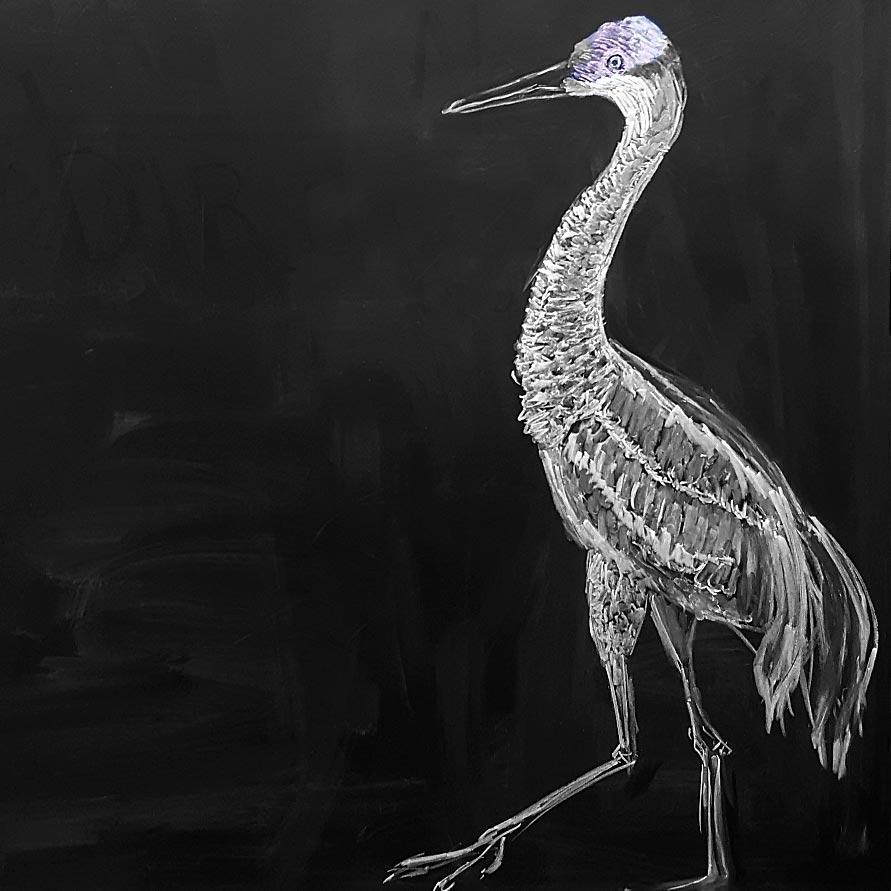 Sandhill Crane Chalkboard Sketch