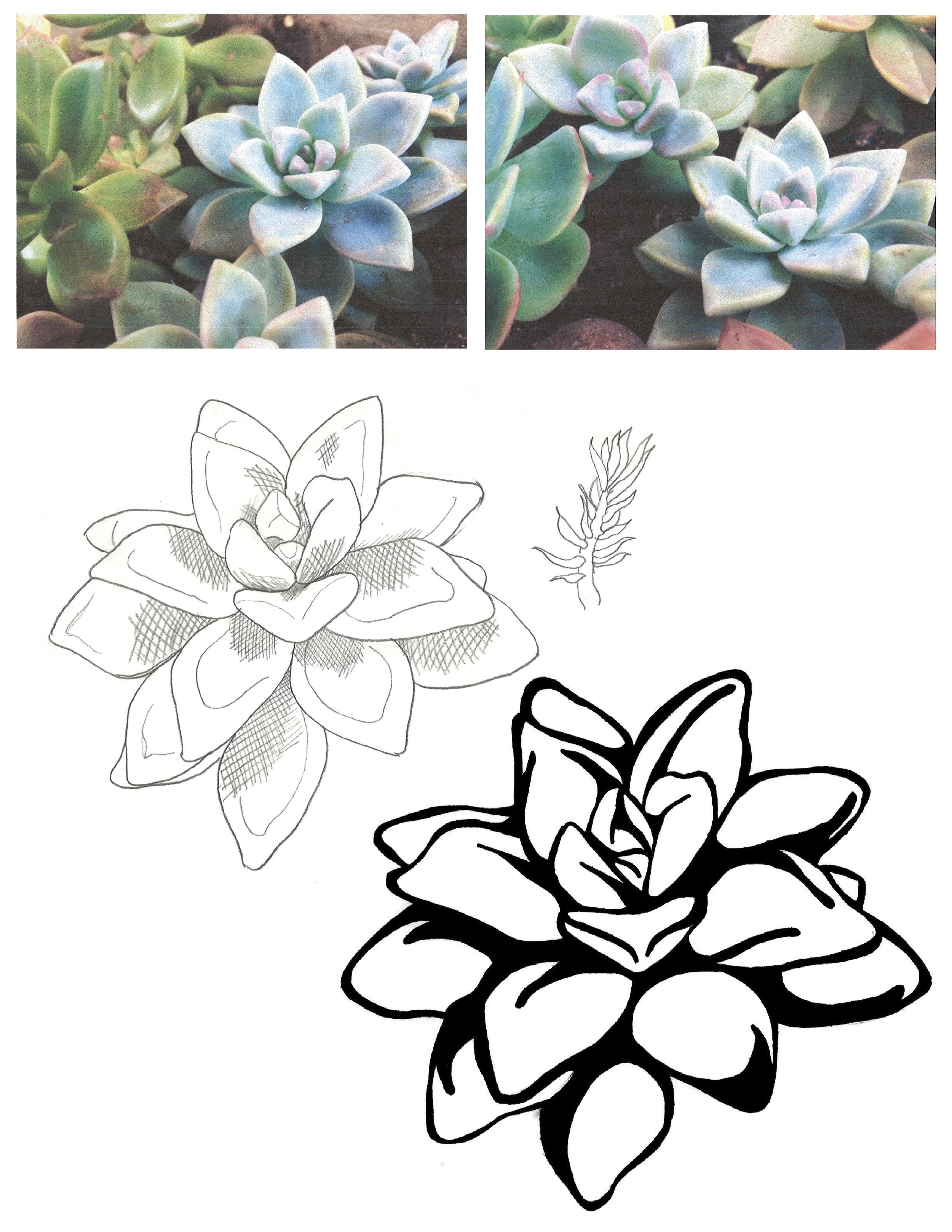 Inspiration Photos and Sketches   Some of the inspiration photos taken from Mindee's succulents for this concept. Also pictured an initial sketch and the final drawing that was then rendered in Illustrator as a vector graphic. ˙