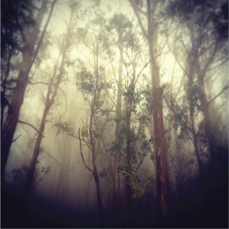 MISTY FOREST PHOTOGRAPH   This is a photograph I took a few years ago in a mist filled forest of eucalyptus trees near my home at the time. The ethereal quality of the mist, soft focus and vignetting fit perfectly with the voice of the Hazel + Beck brand.