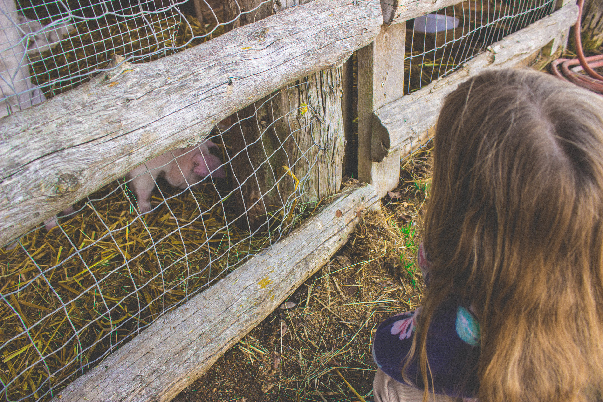 Emma and the piglets
