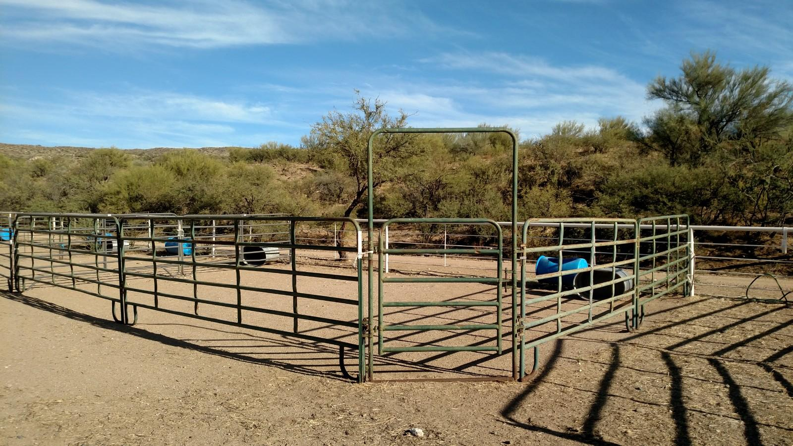 Fence Line Pen. Nice and clean. No leftover food and the water bucket dumped over.