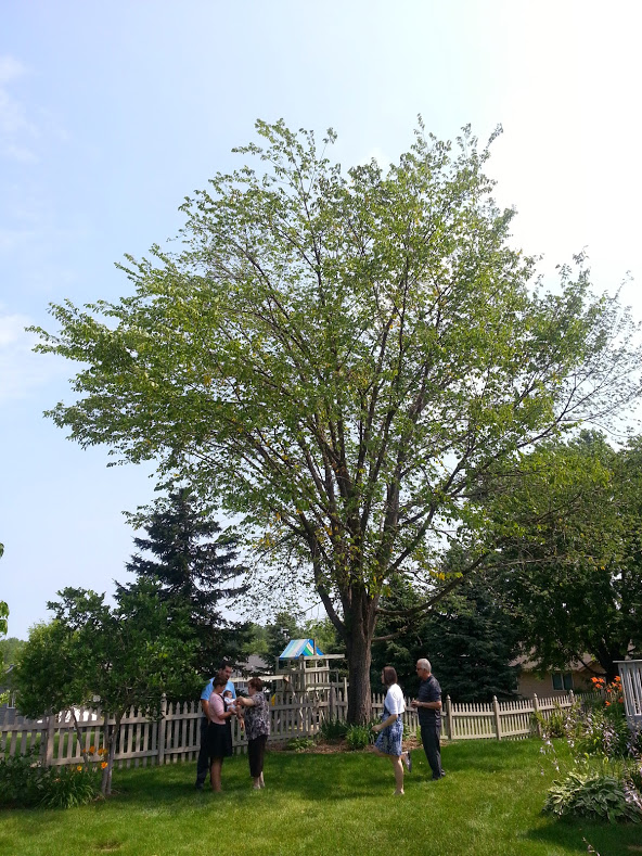 Standing in the shade of our American Elm after Adam's baptism in July 2014, days before its removal in July of 2014. .