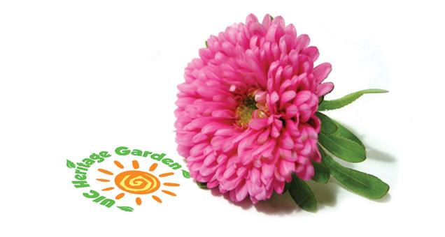 flower_HG.jpg