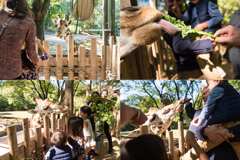 amy-drucker-new-york-city-zoo-day-4.jpg
