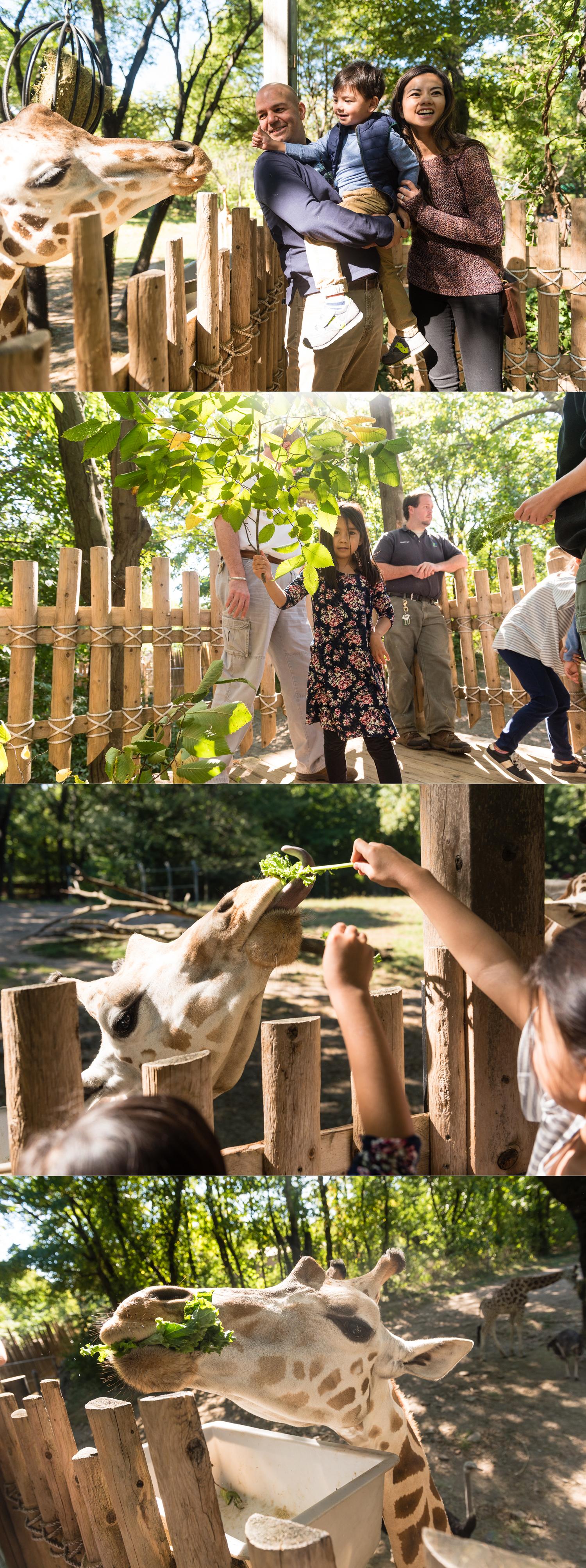 amy-drucker-new-york-city-zoo-day-5.jpg