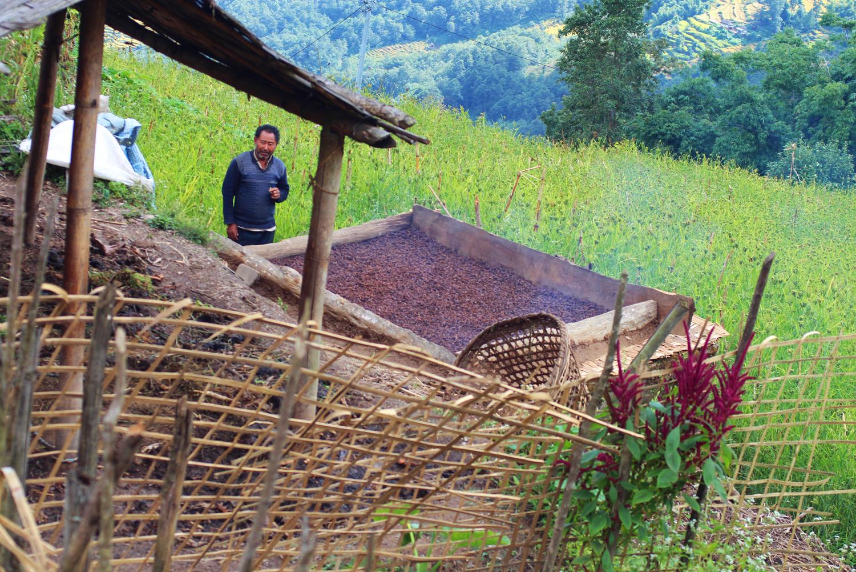 Nepal.EastNepal.Kube.CardamomHarvest.jpg