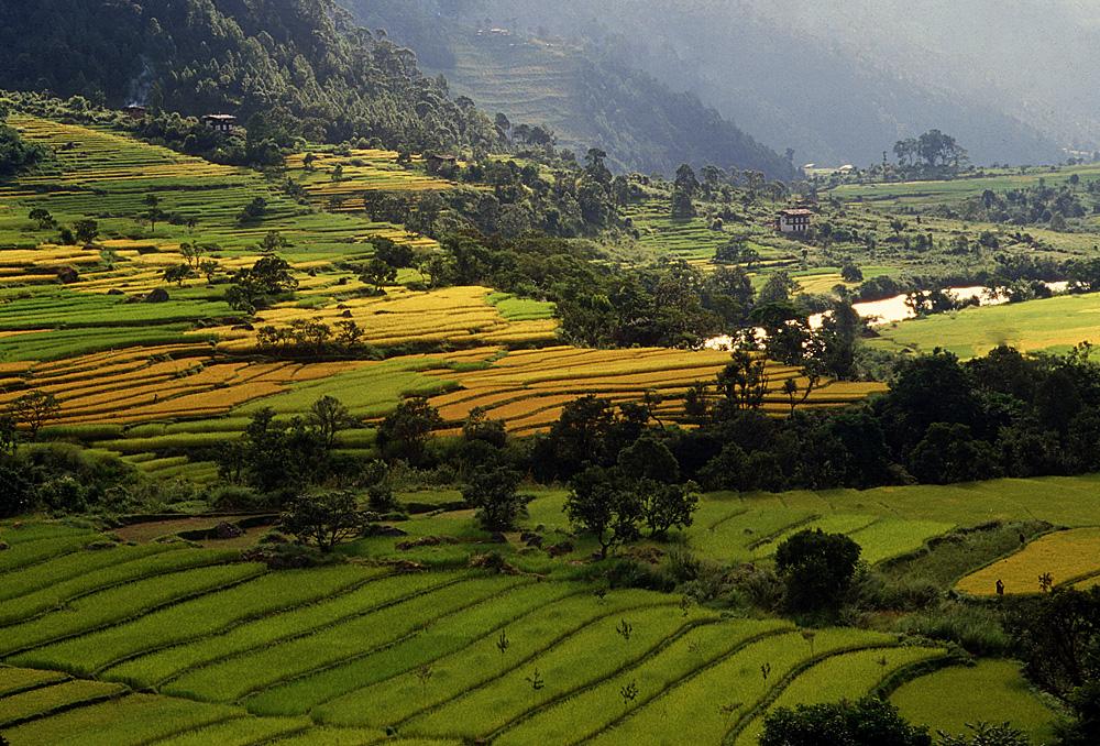 Bhutan.Punakha.Fields.jpg