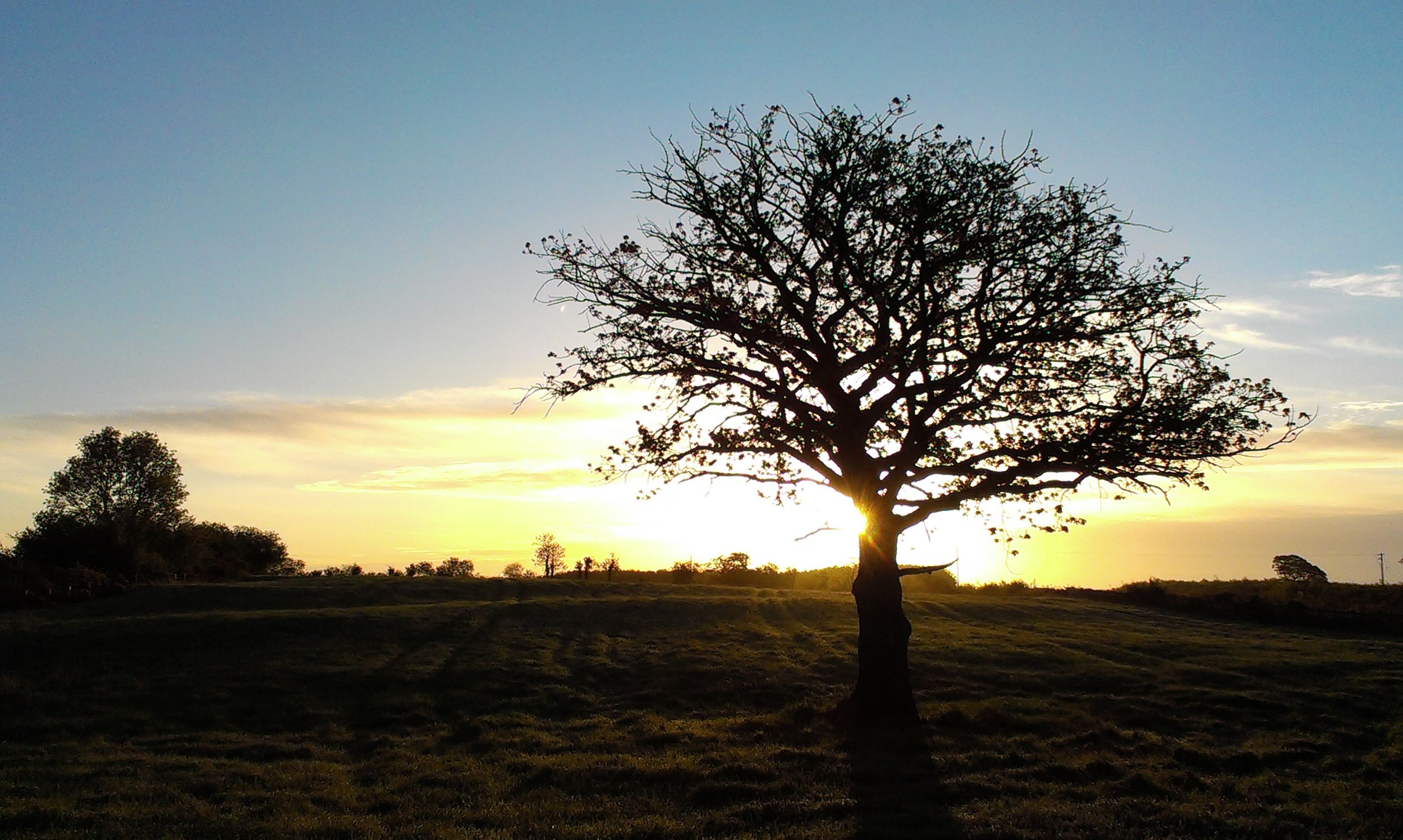 Castletown Tree (wide)