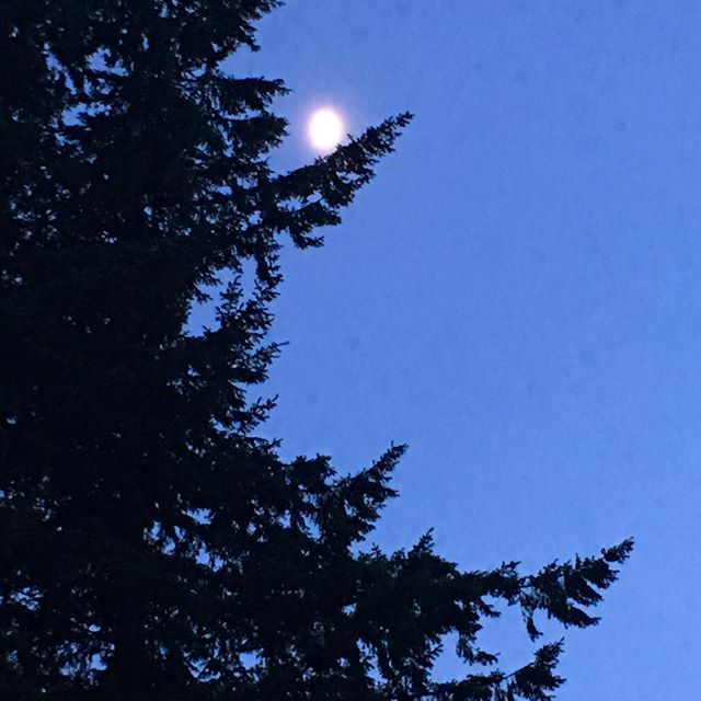 // JUNE MOON // 🌕  #fullmoon🌕 #moonvibes #lapisblue #twilight #junemoon #moon #pnw #moonphoto #pnwartist #seattlewashington #moonmeditation #trees #meditationinnature