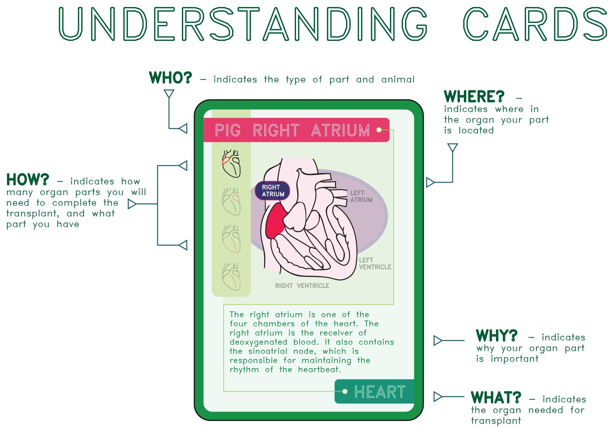 Understanding Cards.jpg