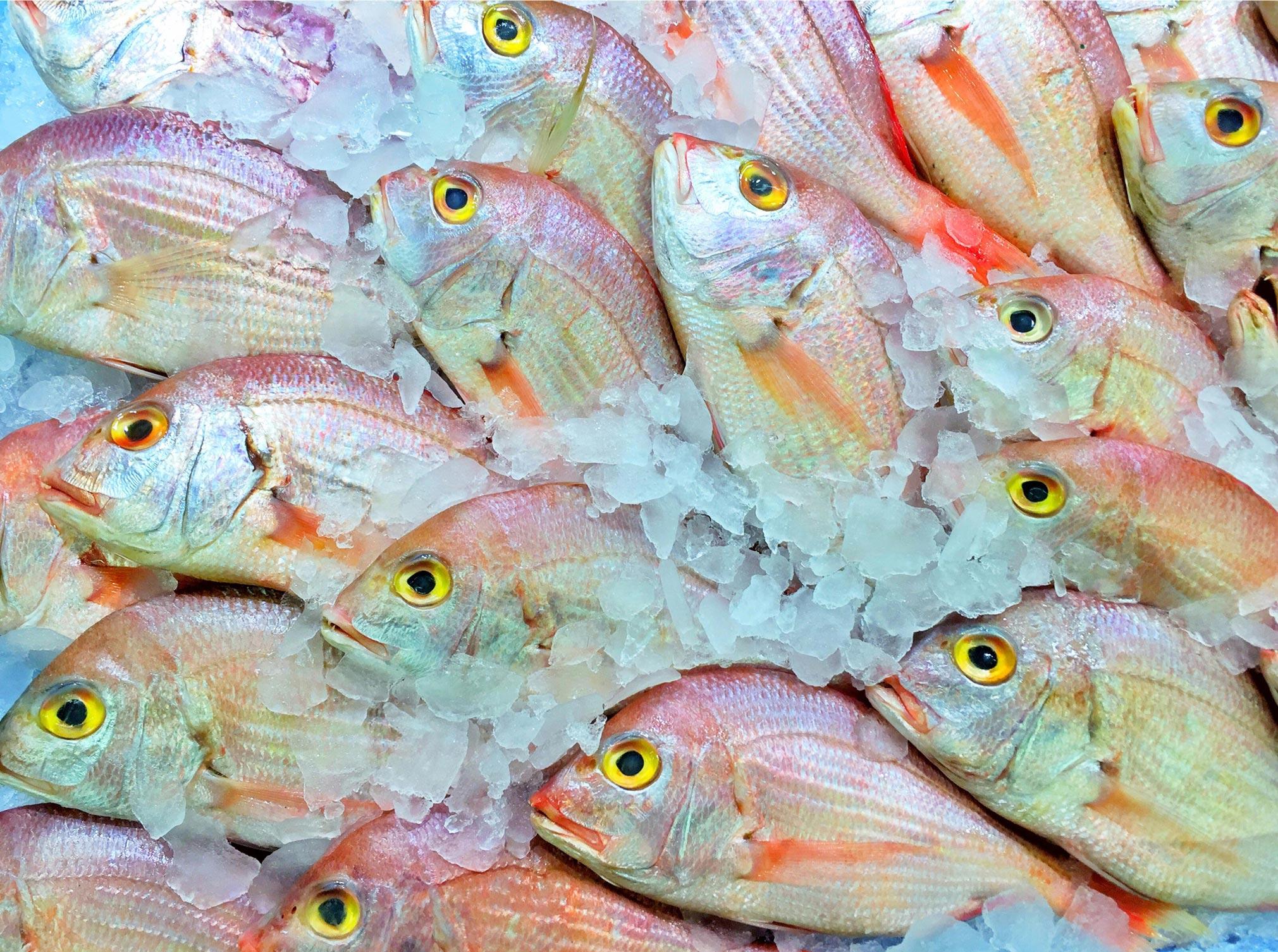 Mercadona-Fishes.jpg