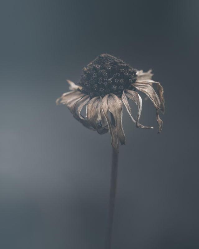 ciscandra-nostalghia